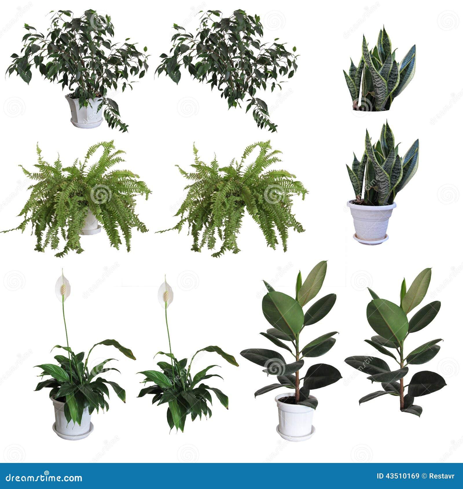 Zierpflanzen stock abbildung bild 43510169 for Dekor von zierpflanzen