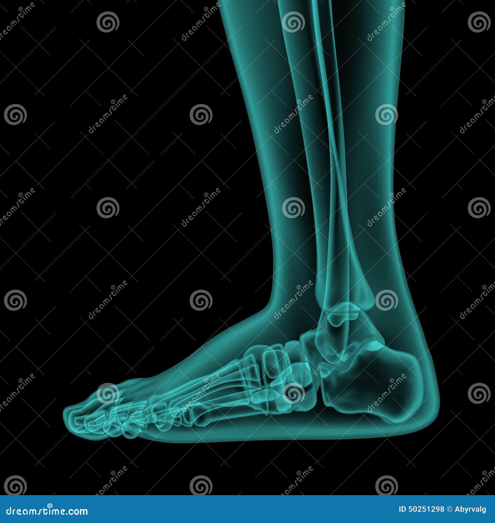 Zij x-ray mening van menselijke voet en enkel