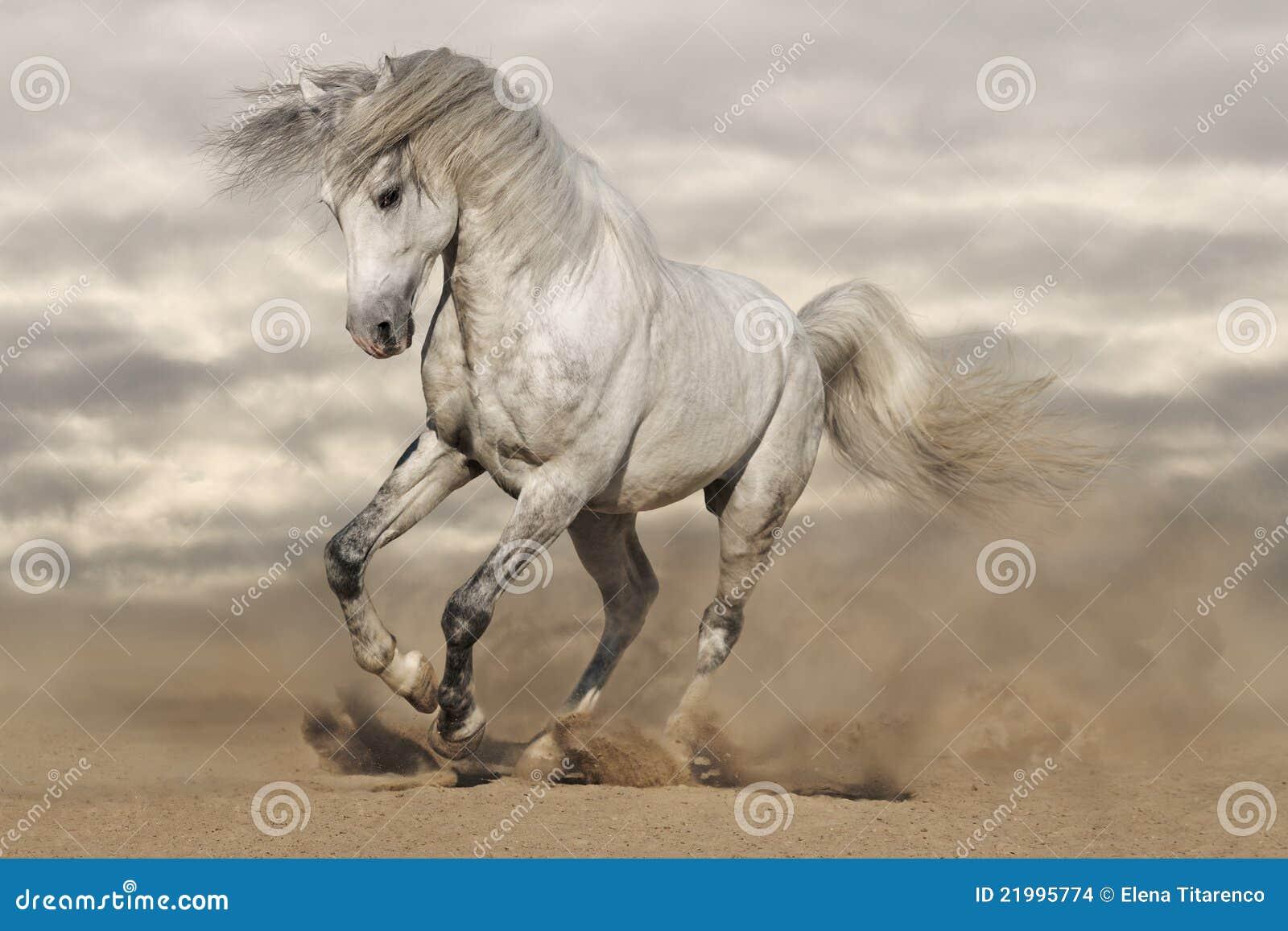 Zilveren grijs paard in woestijn