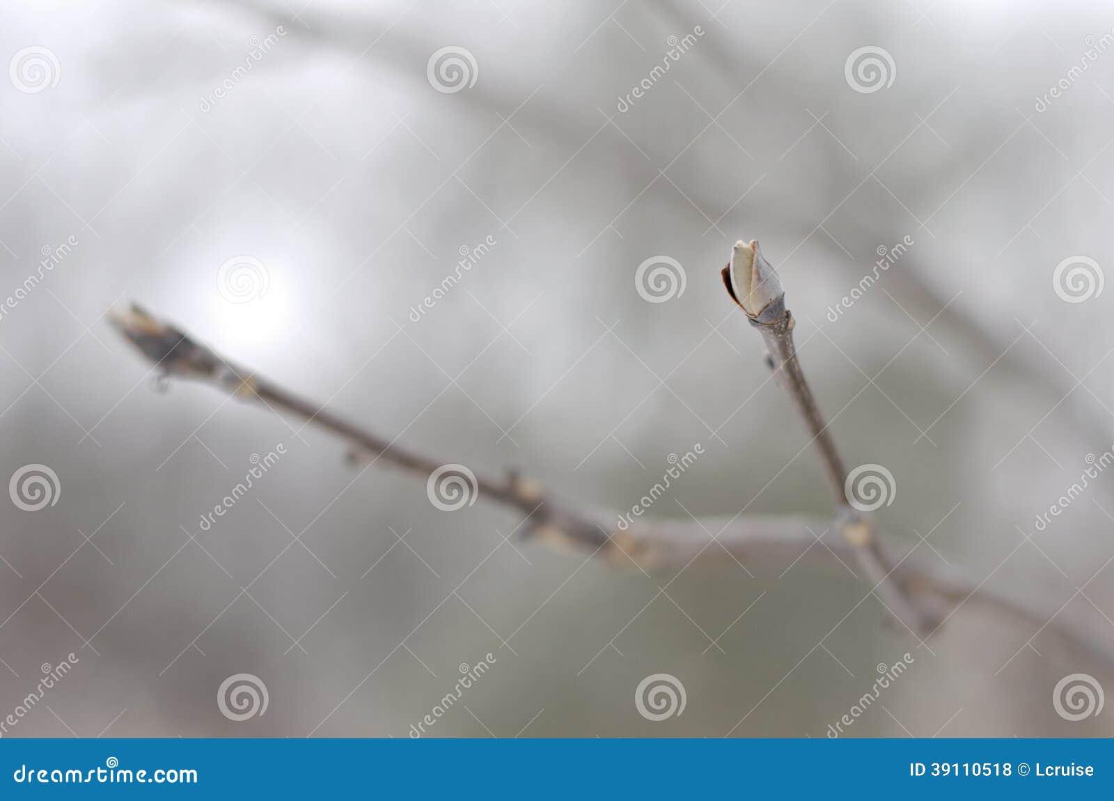 Zilveren knop in de winter