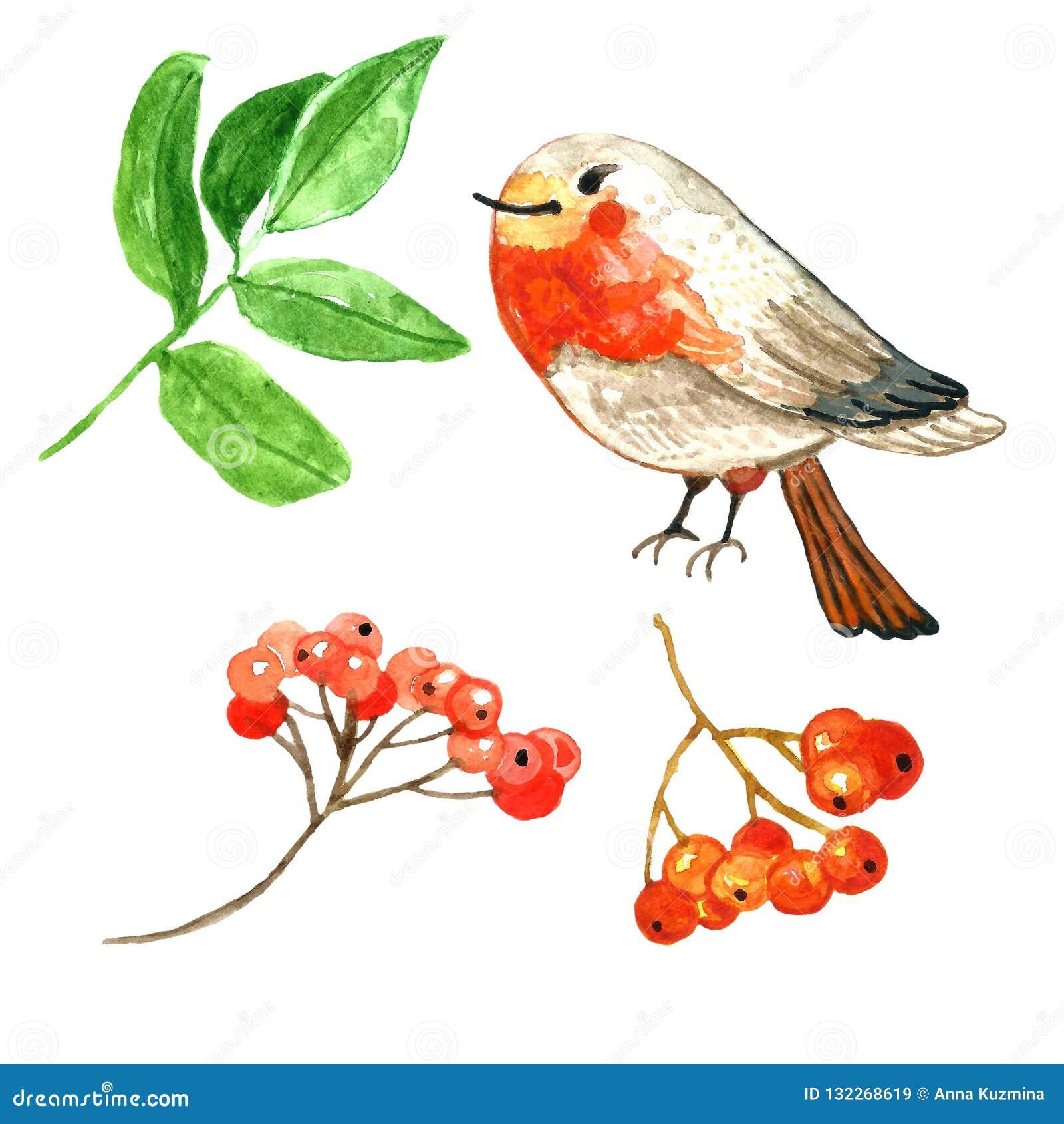 Zim ręki rysować czerwone jagody i śliczny kreskówka rudzika ptak beak dekoracyjnego latającego ilustracyjnego wizerunek swój pap
