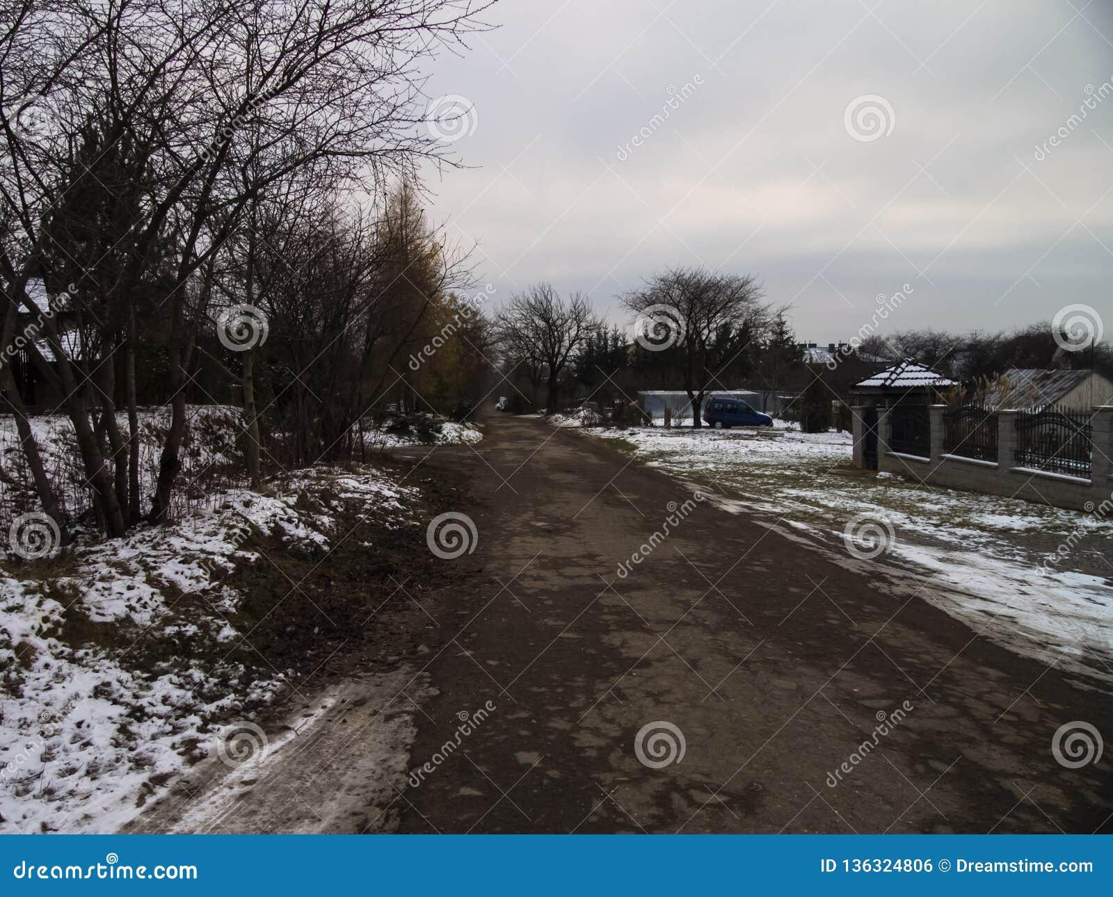 Zima śnieg z krajobrazem drzewa z mrozem i droga