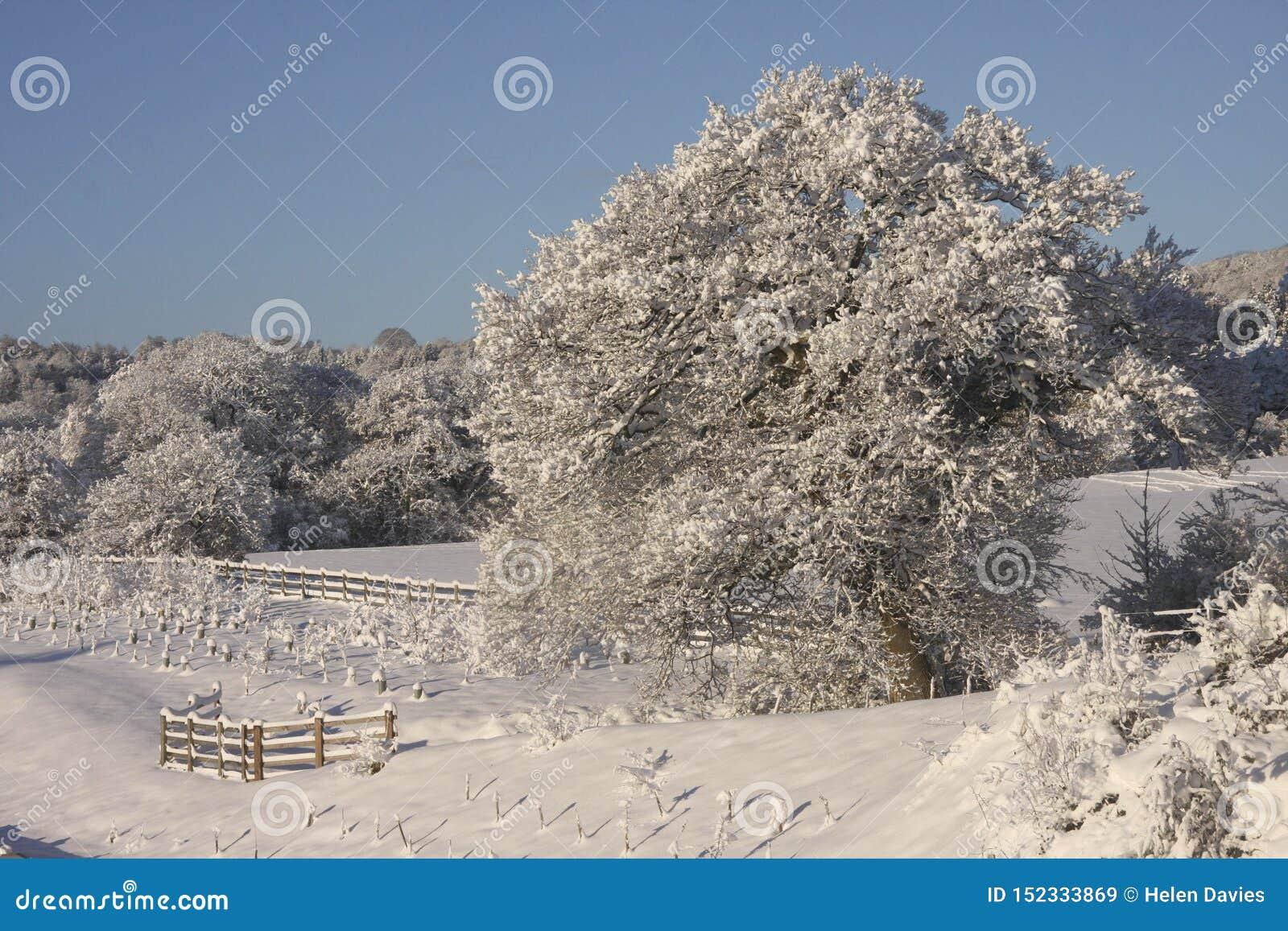 Zima śniegu krajobraz, Cardiff, UK
