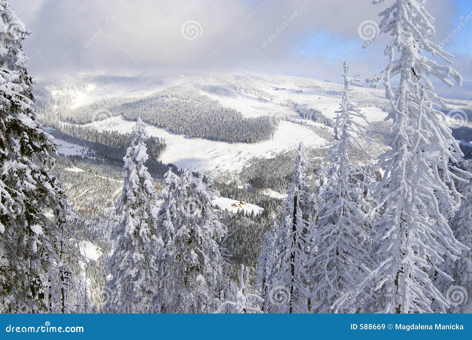 Zima czeska