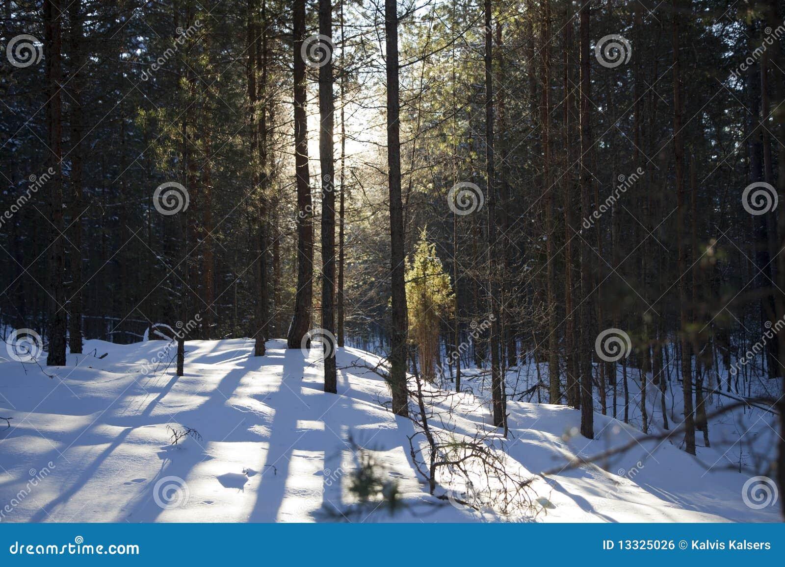 Zima drewna