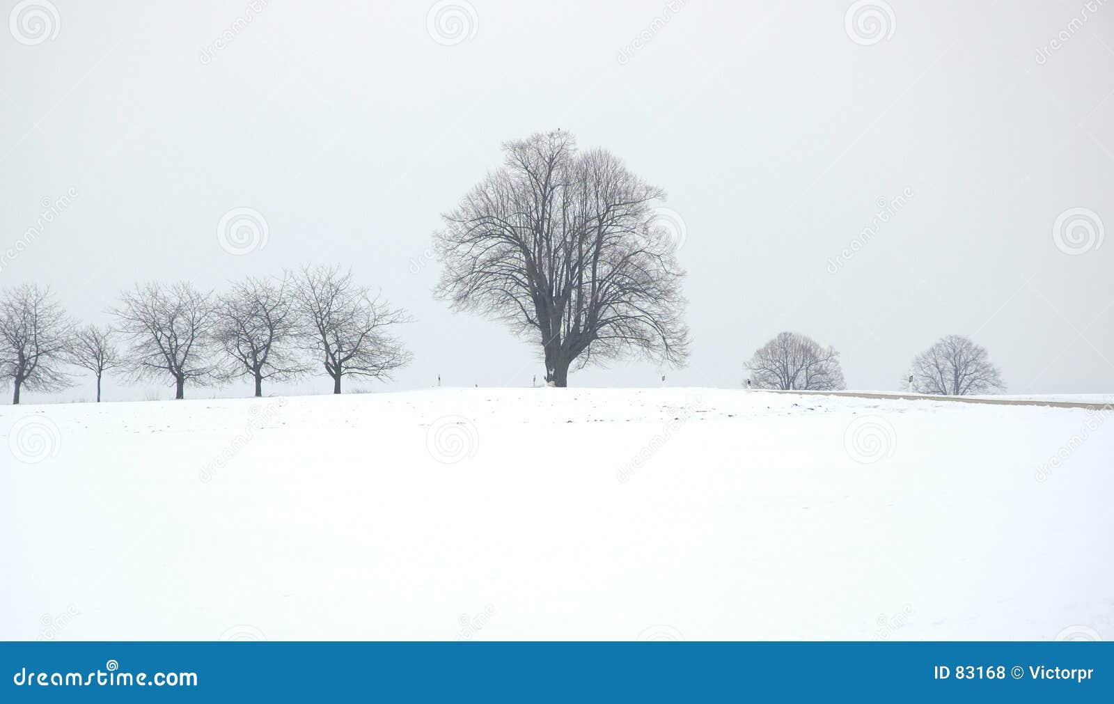 Zima drzew