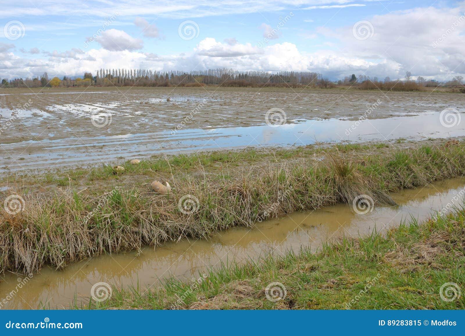 Zima grunt rolny