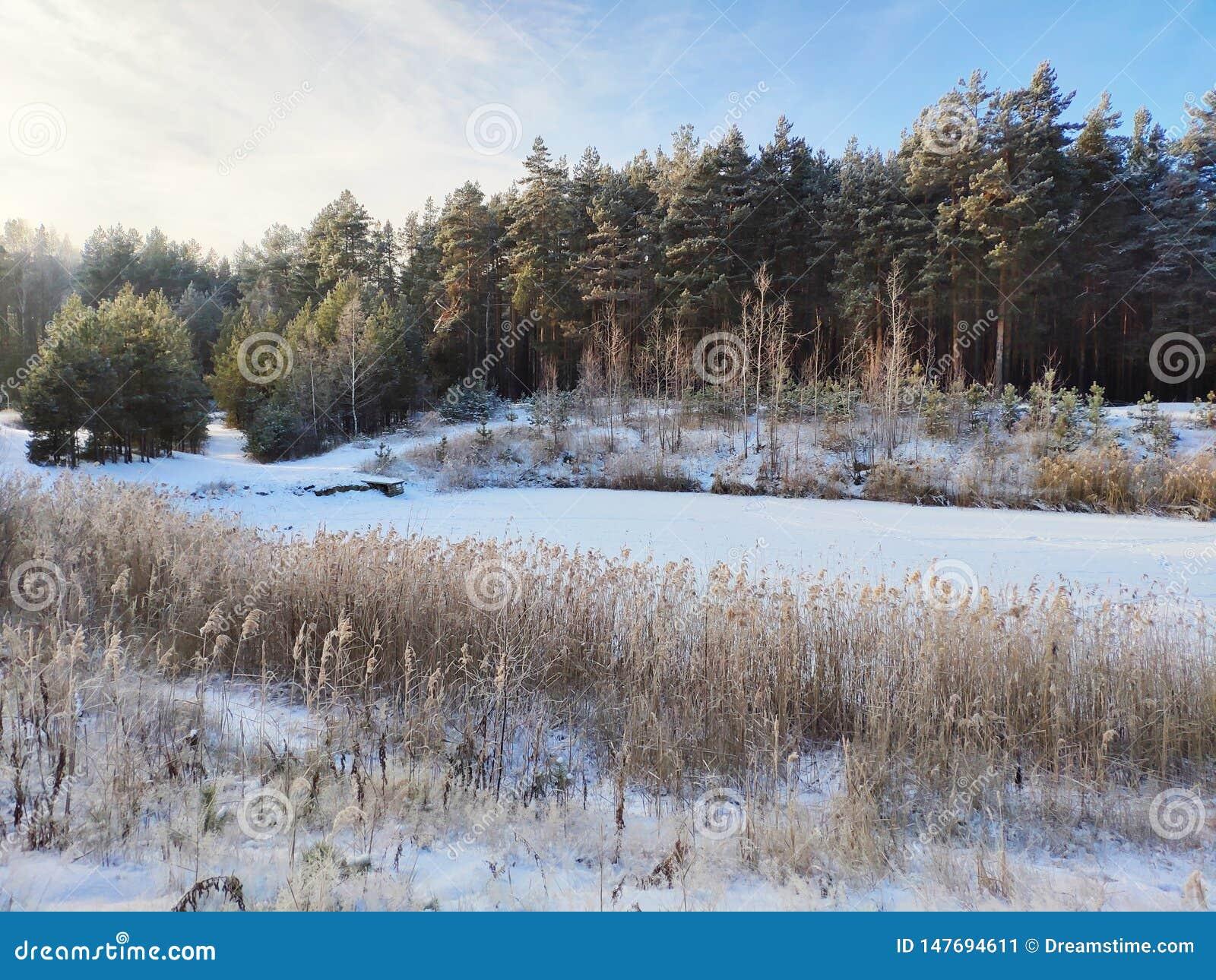 Zima jezioro w lesie