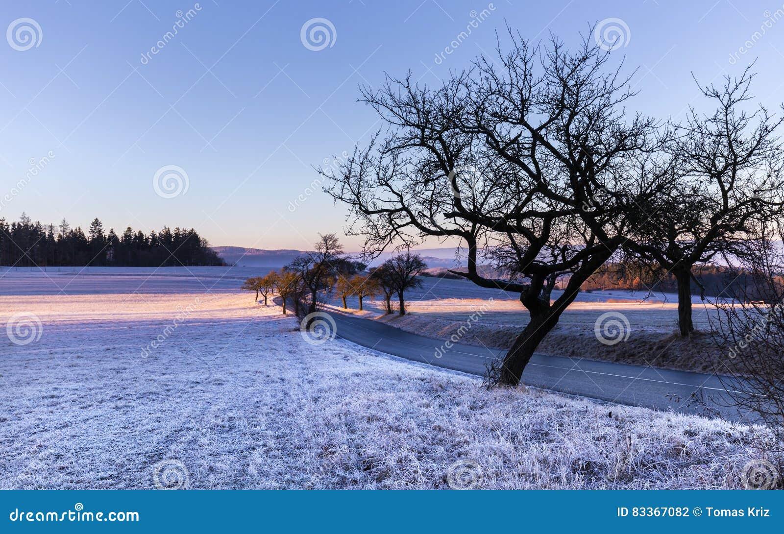 Zima krajobraz przy wschodem słońca i sylwetką drzewa