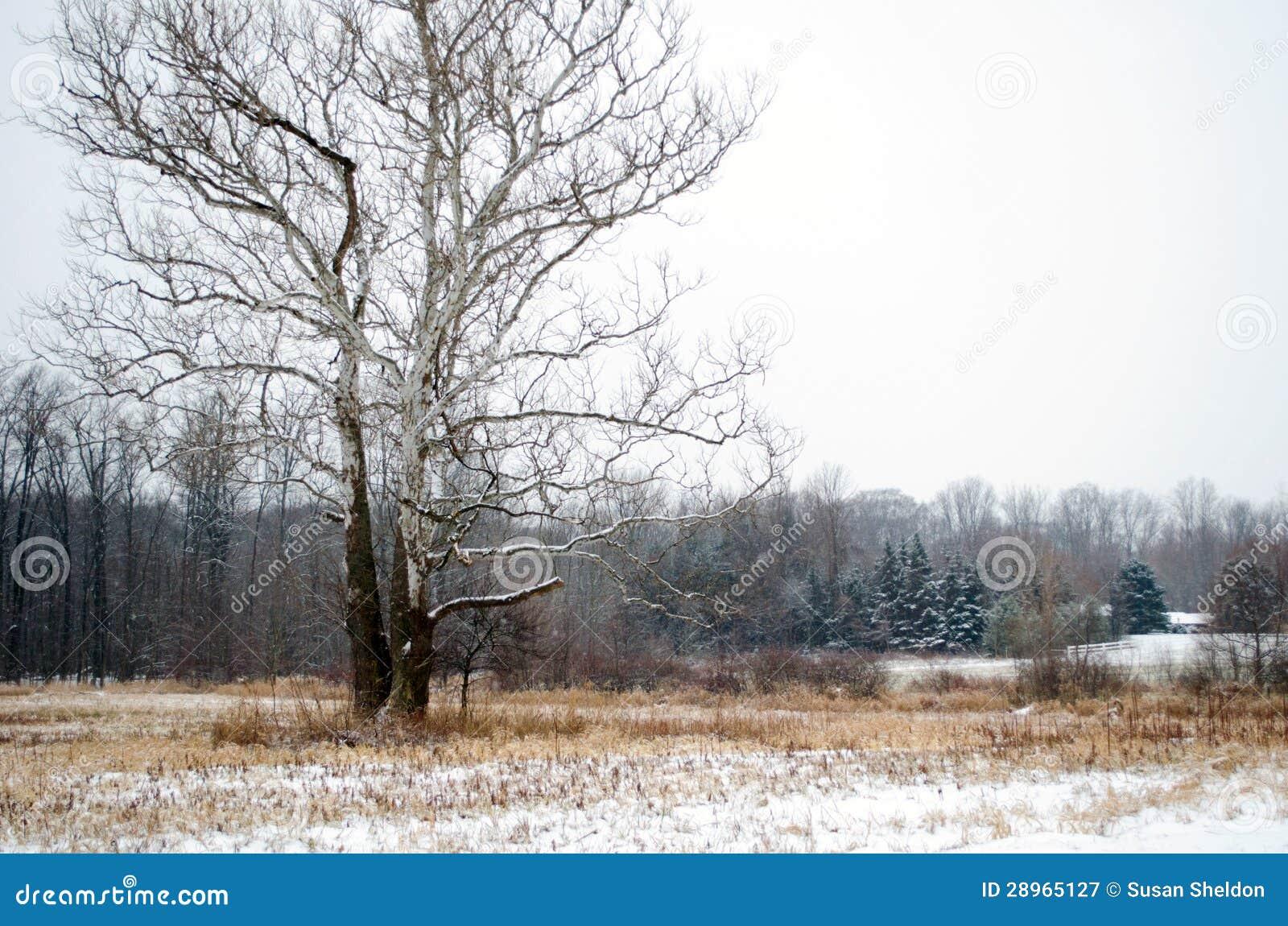 Zima krajobraz w Michigan