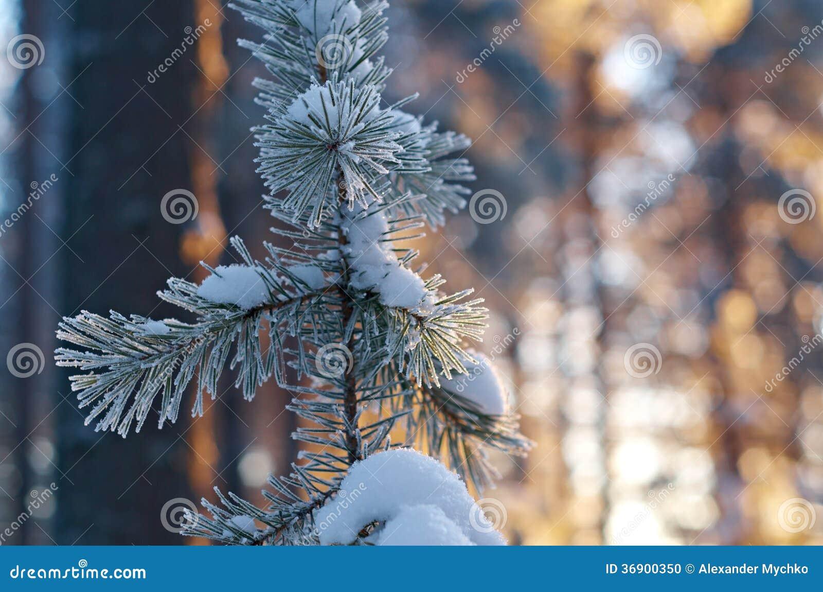 Zima krajobraz. Zimy scena
