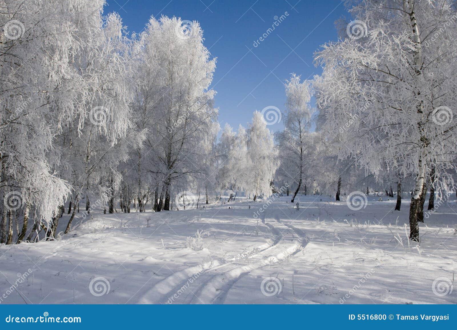 Zima krajobrazowa