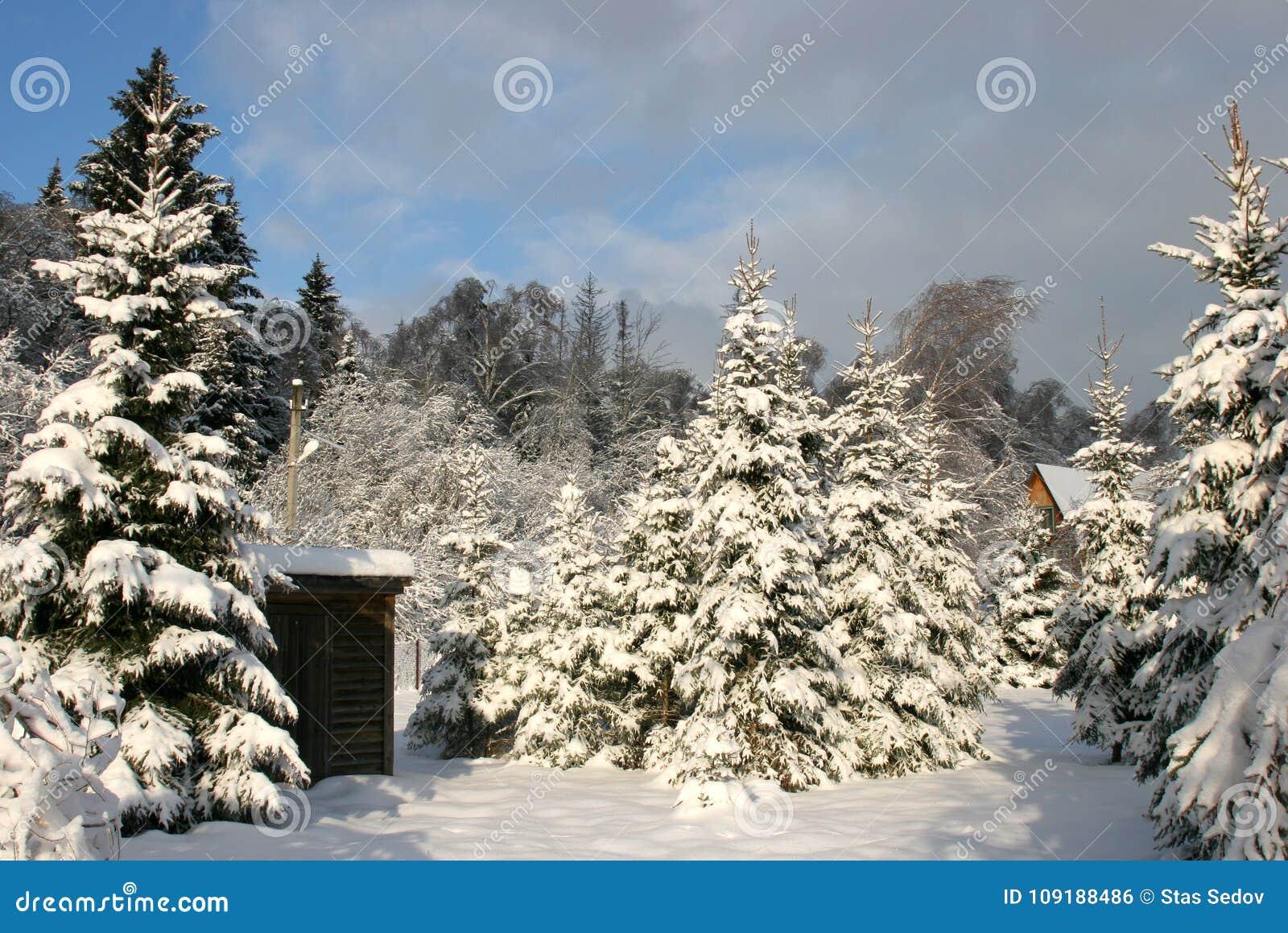 Zima kraju jata