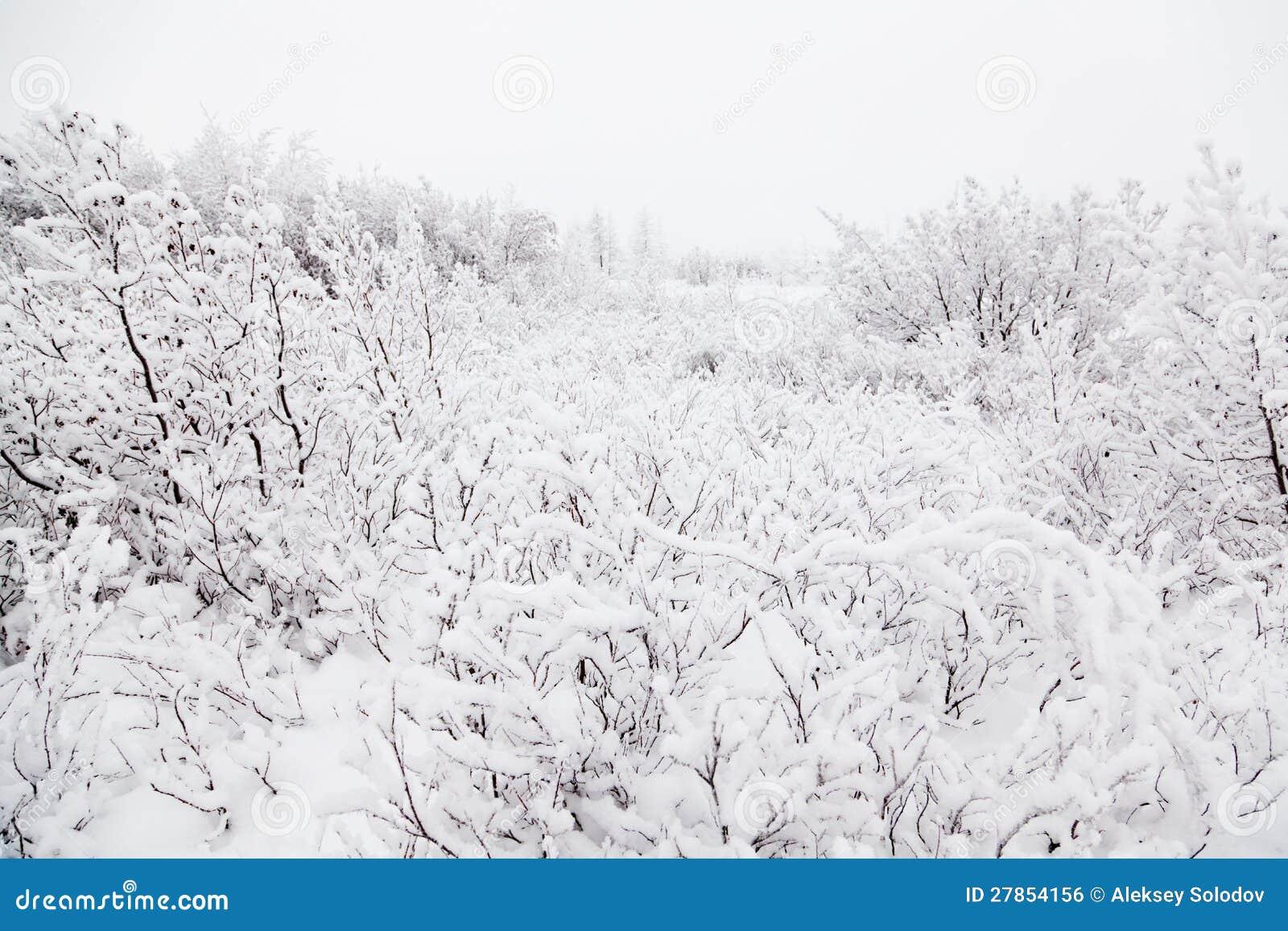 Zima krzak
