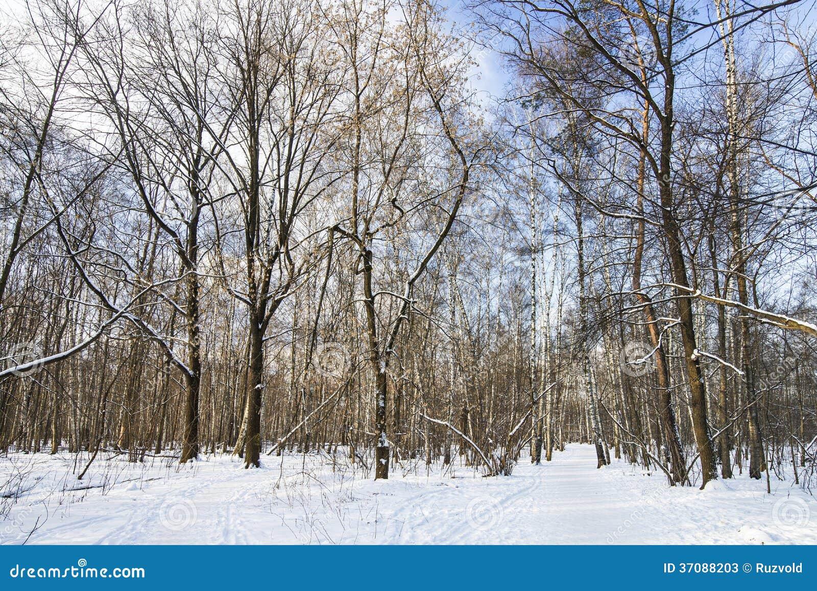 Download Zima las obraz stock. Obraz złożonej z drzewo, droga - 37088203