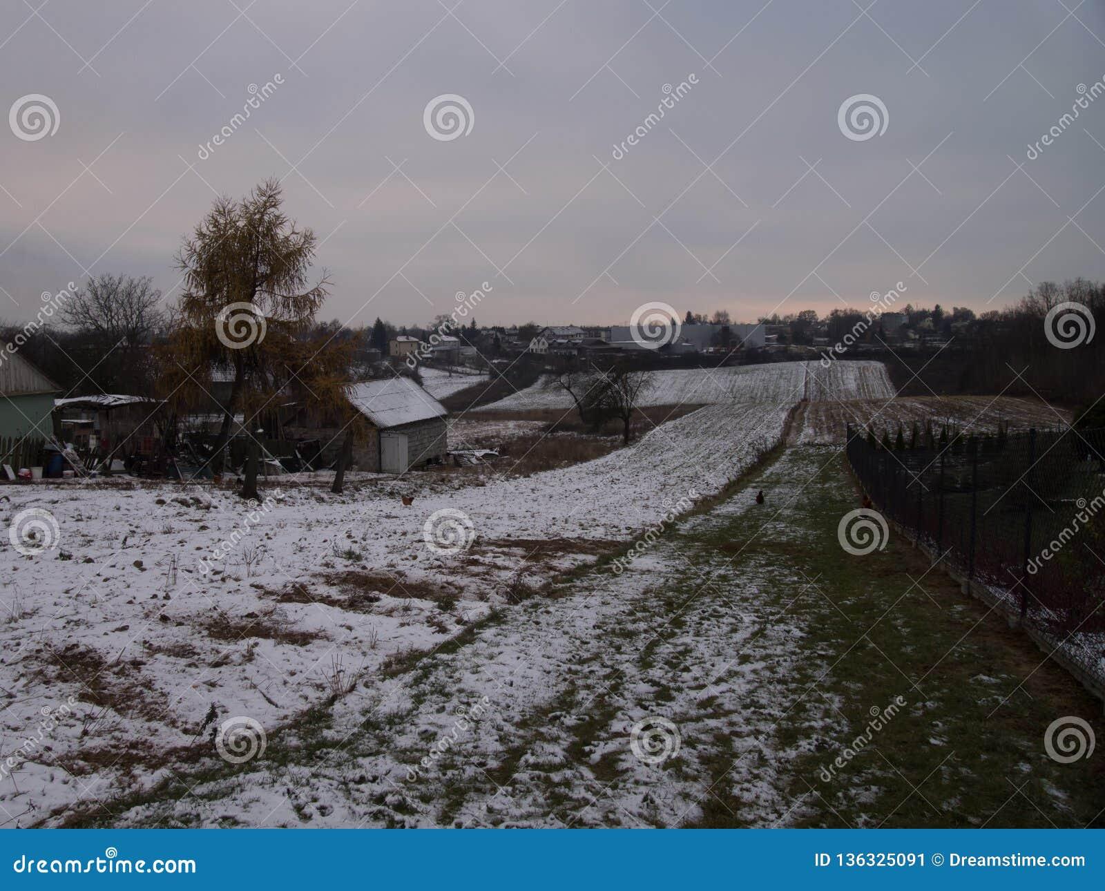 Zima las w tle z ładnych mgieł menchii delikatnym niebem w, pole i