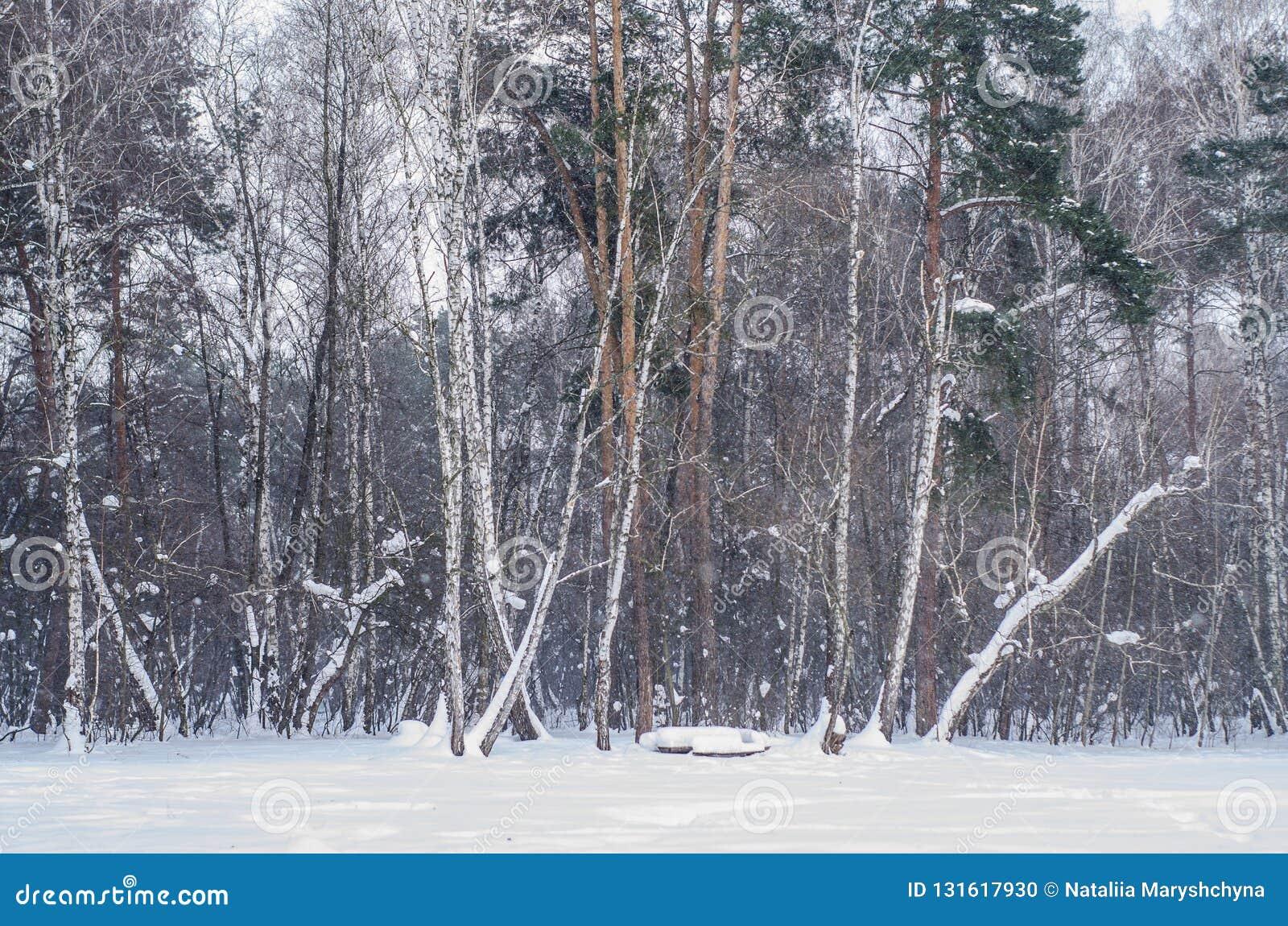 Zima lasu ściana drzewa z śniegiem zakrywającym rozgałęzia się