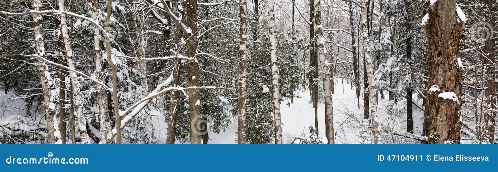 Zima lasu krajobrazu panorama
