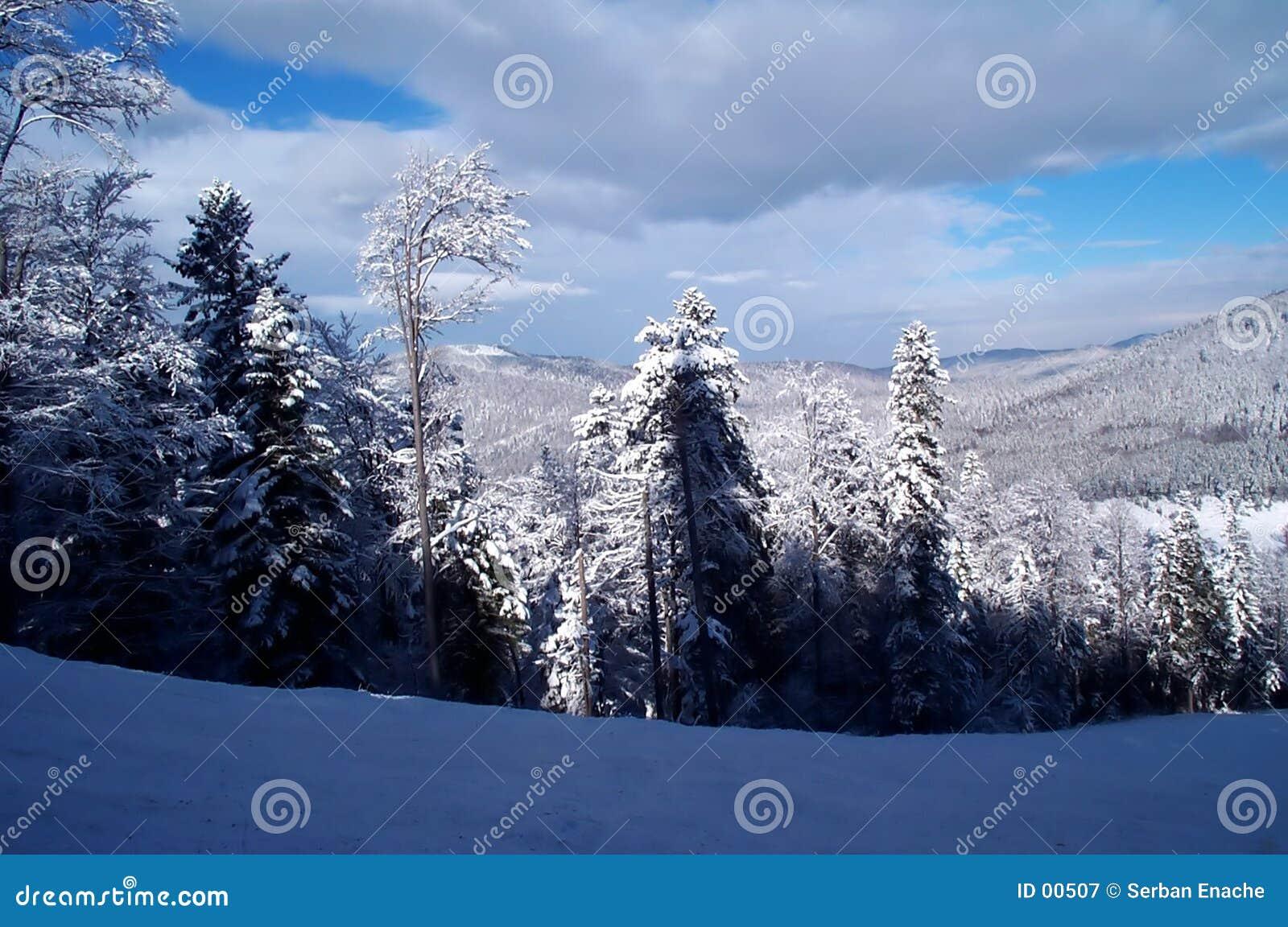 Zima leśna