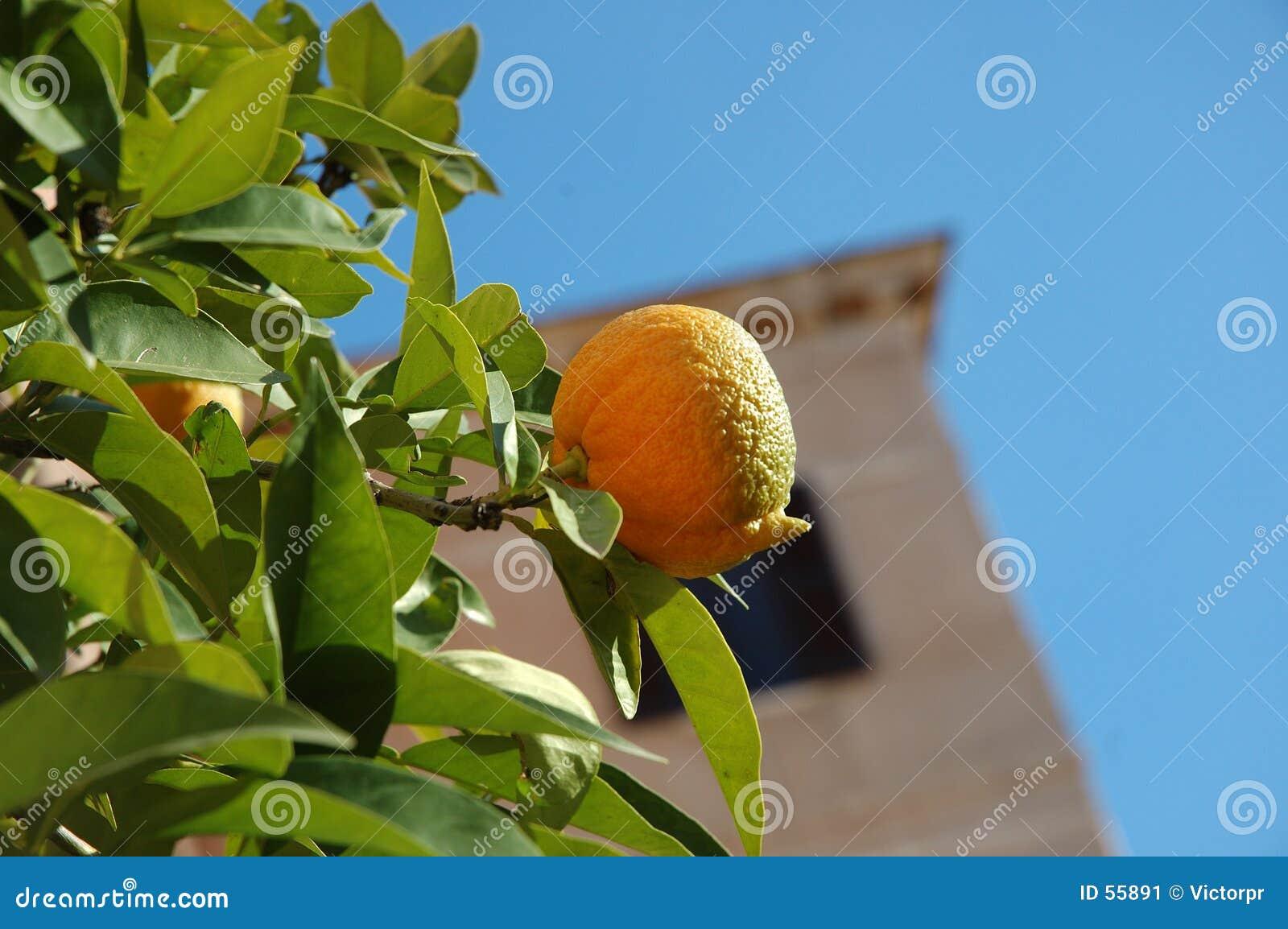 Zima owocowych