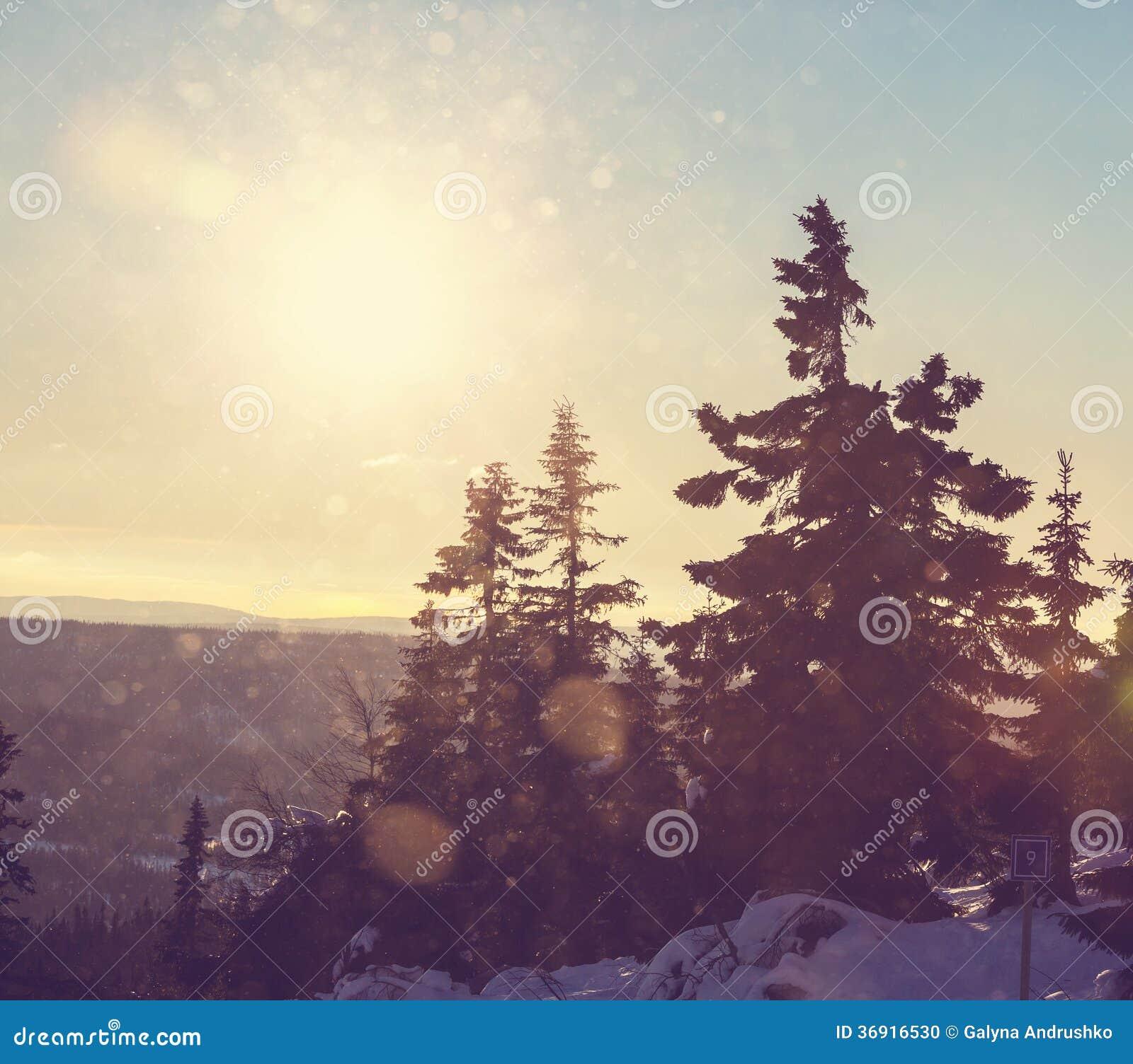 Zima sezon