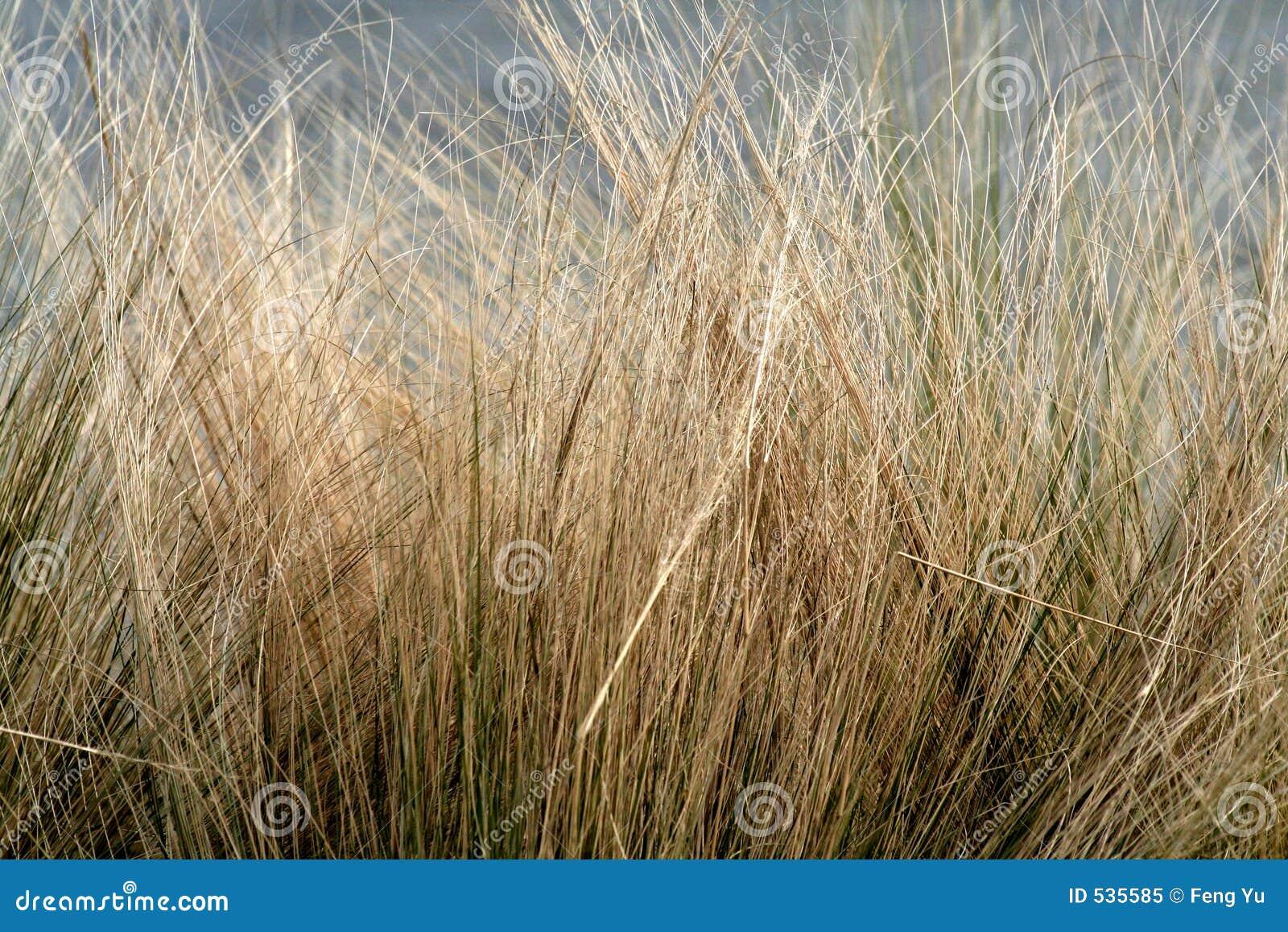 Zima trawy