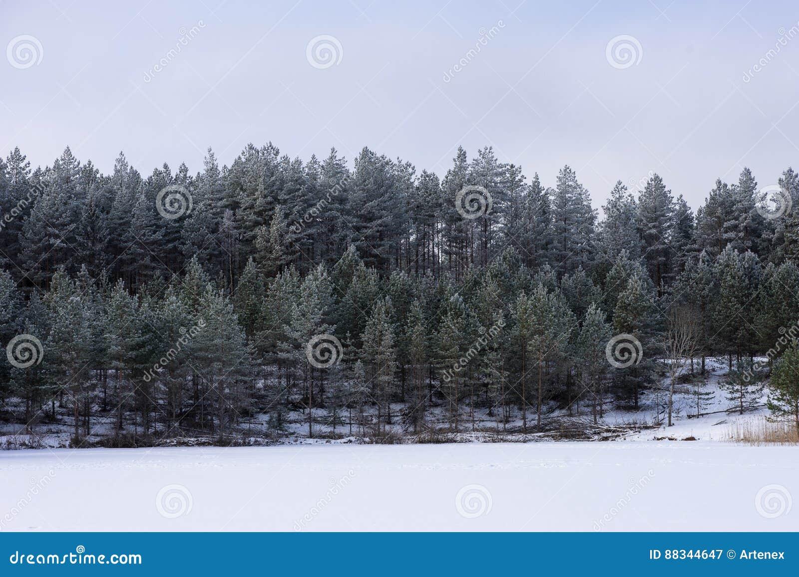 Zima w jeziorze Lodowaty zimny lasowy Mroźny drewno i ziemia Mróz temperatury w naturze Śnieżny naturalny środowisko