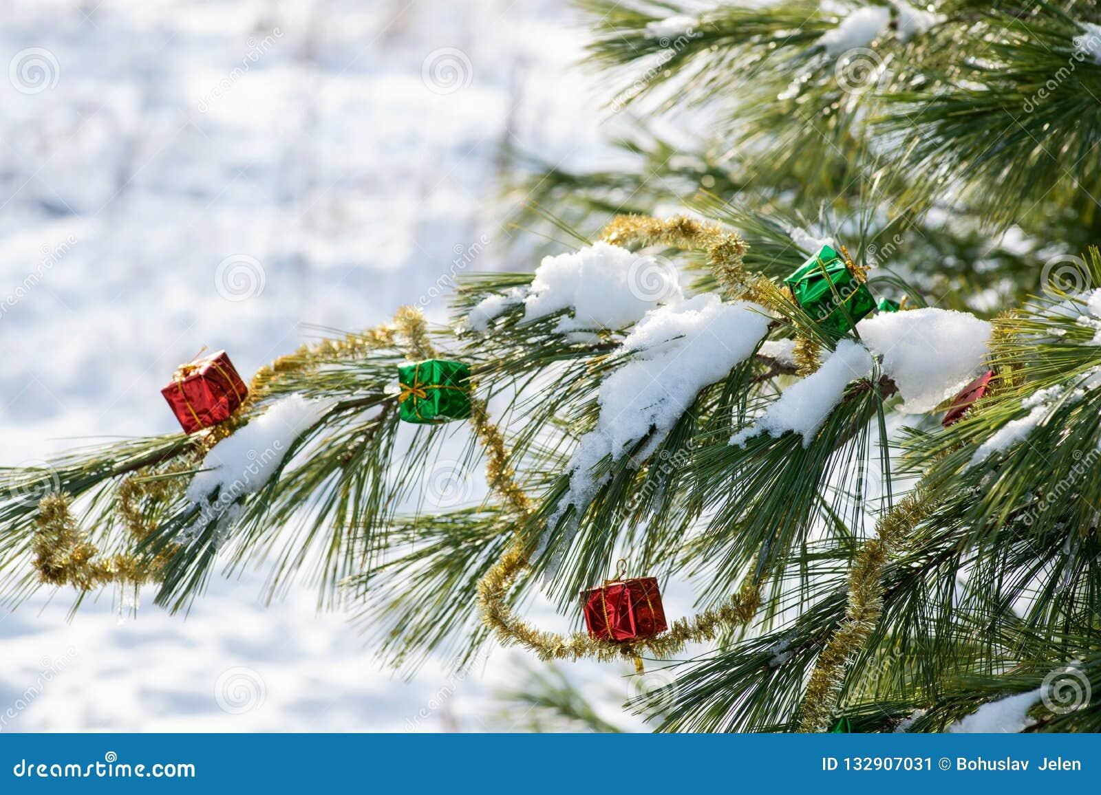 Zima wakacje dekoracji pojęcie: Bożenarodzeniowy prezenta wystrój, świecidełko girlanda i zamarznięty śnieg zakrywająca sosna, ka