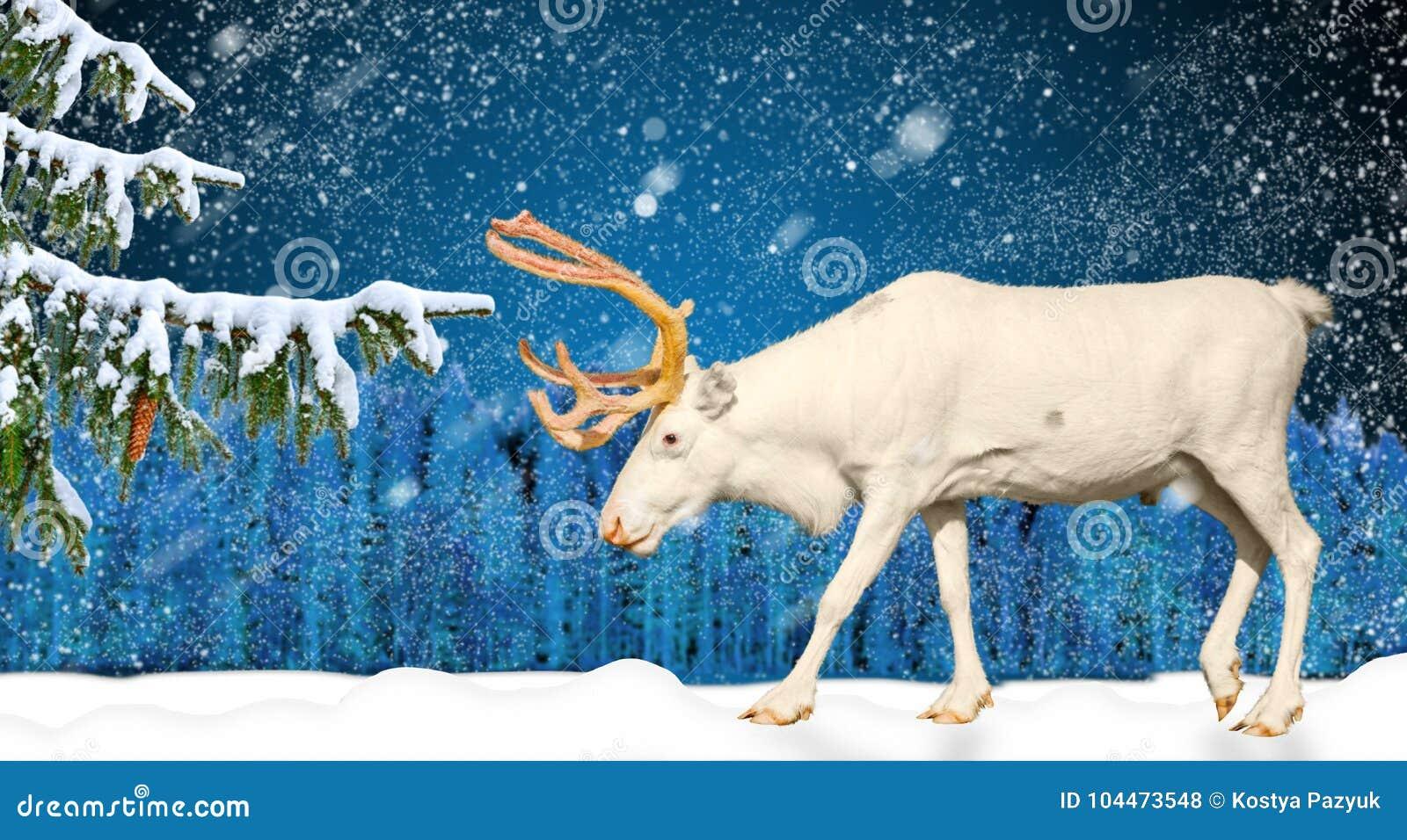 Zima wakacje scena w snowing rogaczu i lesie