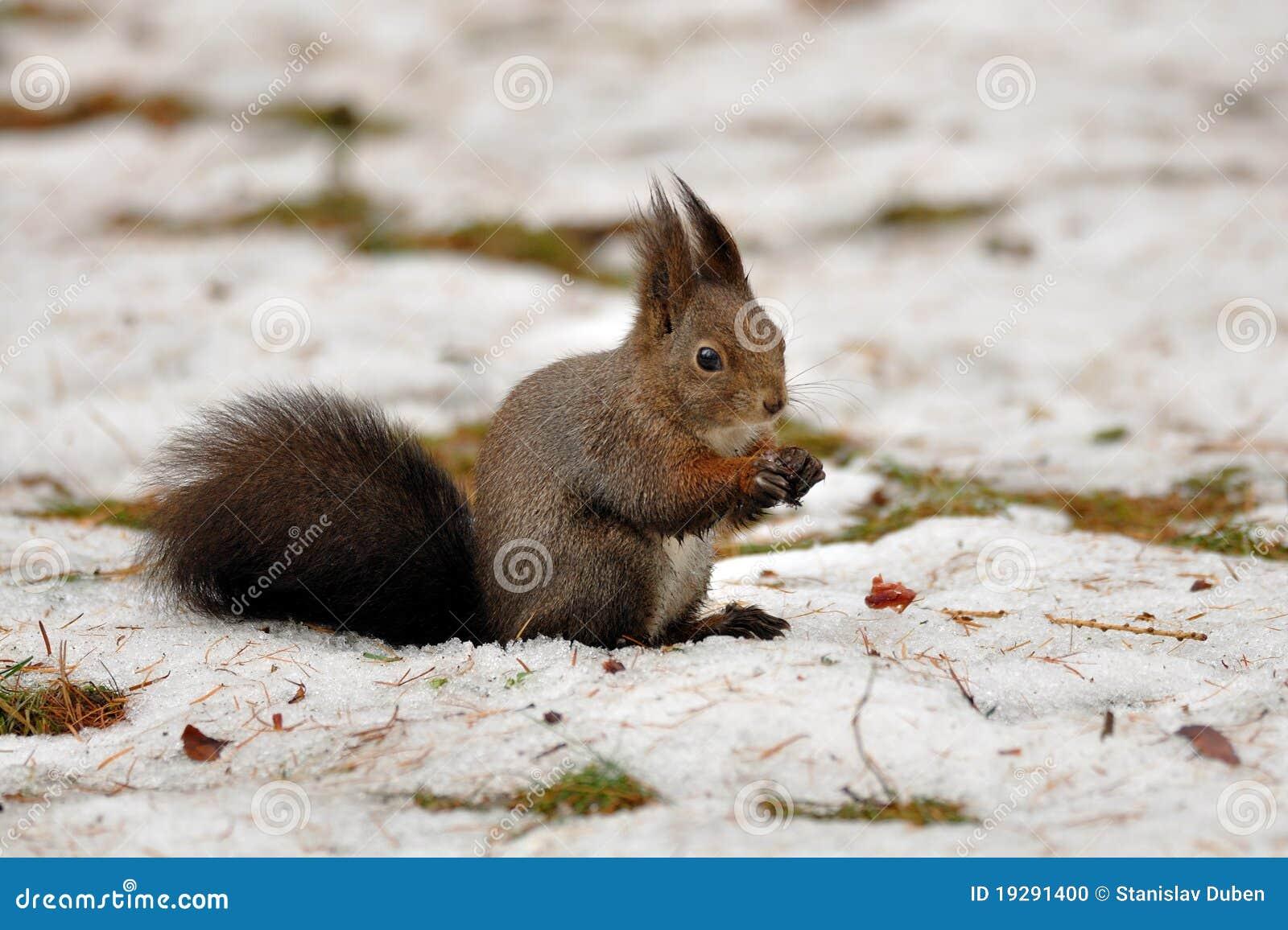 Zima wiewiórcza zima