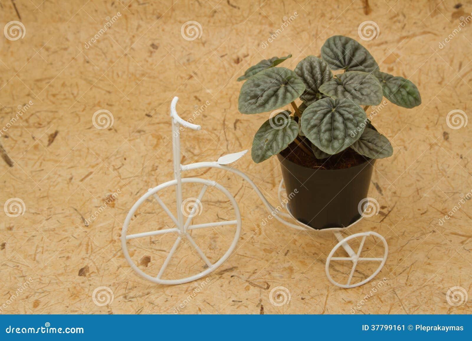 Zimmerpflanze Auf Weinlesefahrrad Stockbild Bild Von Potentiometer