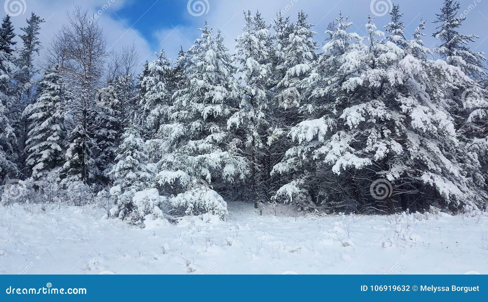 Zimy Drogowa Śnieżna jodła, grzmot Podpalany Kanada