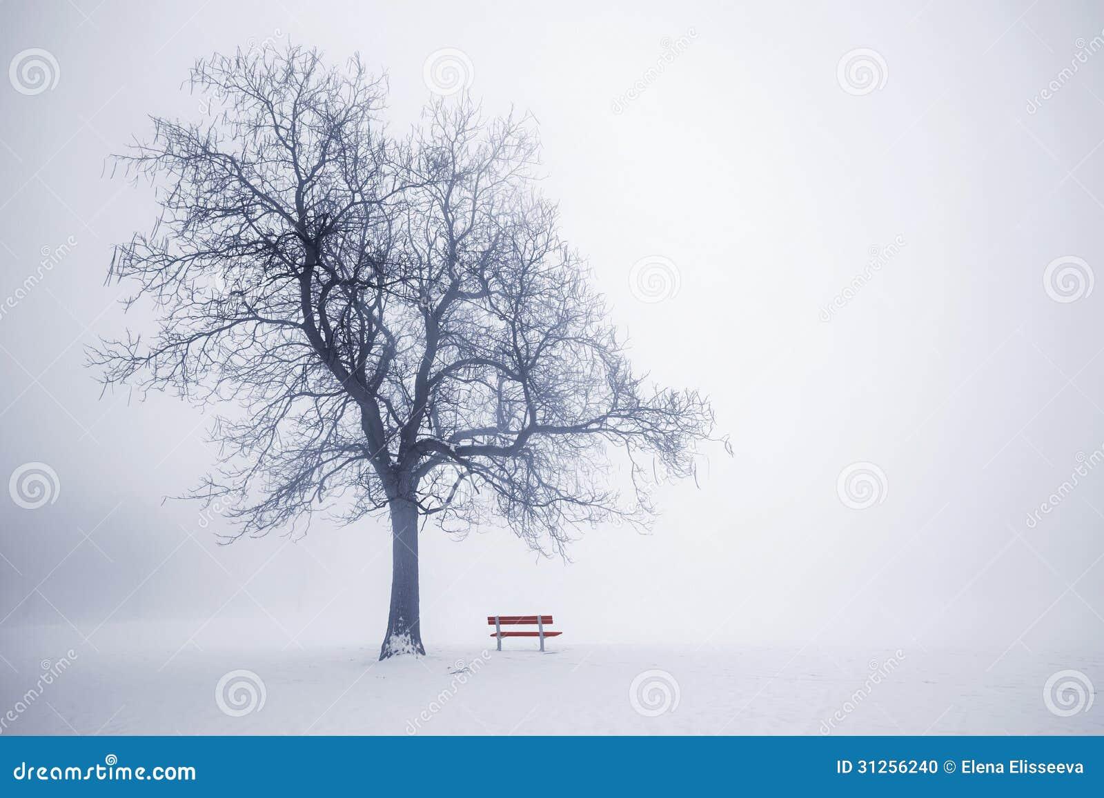 Zimy drzewo w mgle
