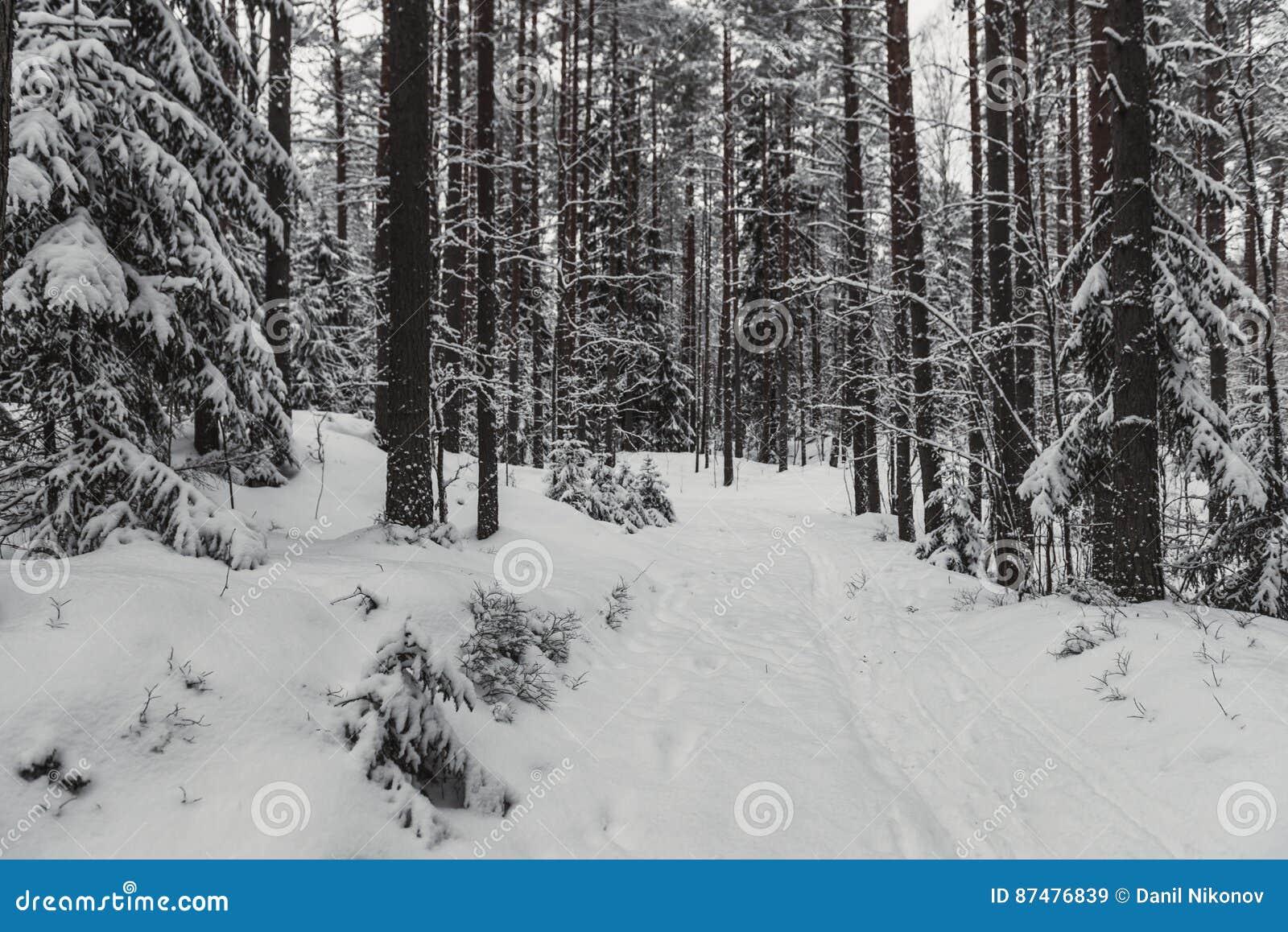 Zimy lasowej natury śnieżny krajobrazowy plenerowy tło