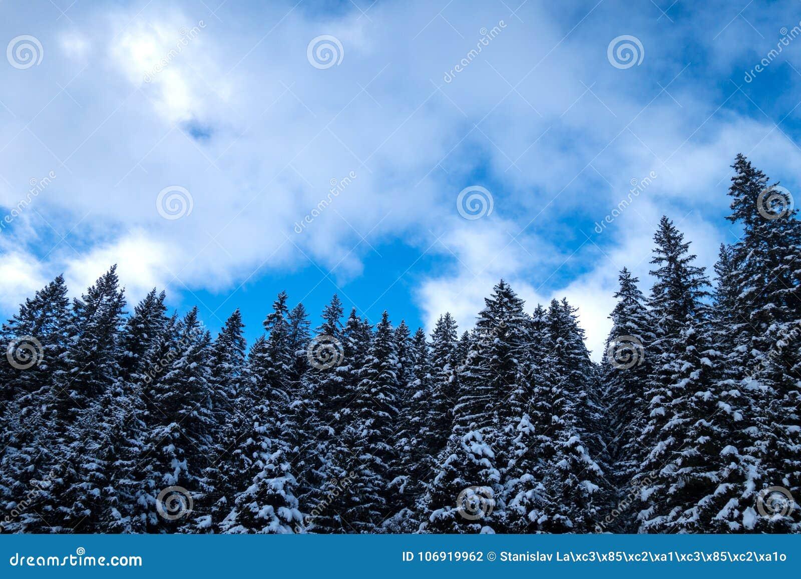 Zimy lasowy tło w Austria,