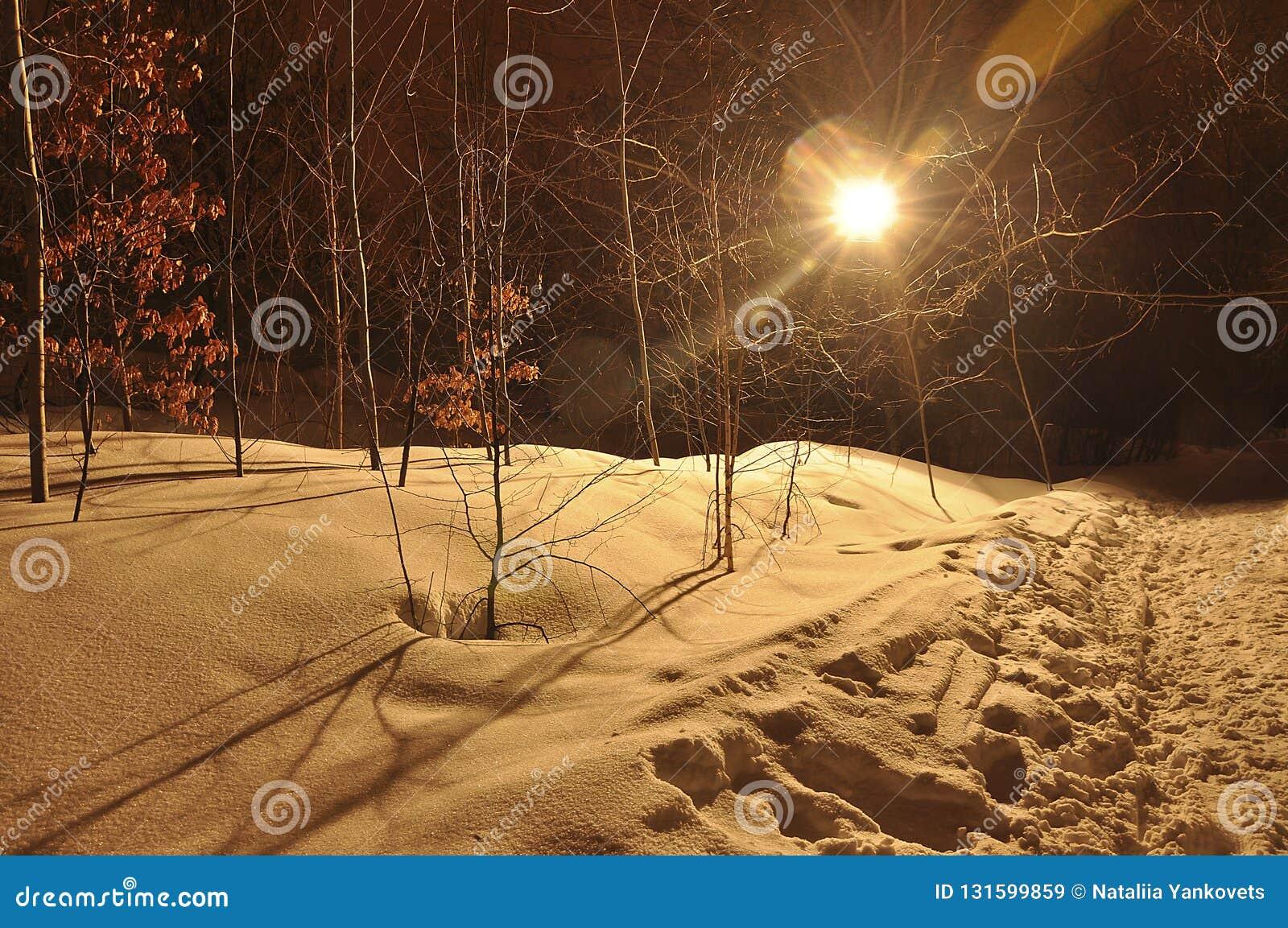Zimy nocy krajobraz z lasem z kolorów żółtych liśćmi, zakrywającymi z miękkim śniegiem i barwiącymi promieniami