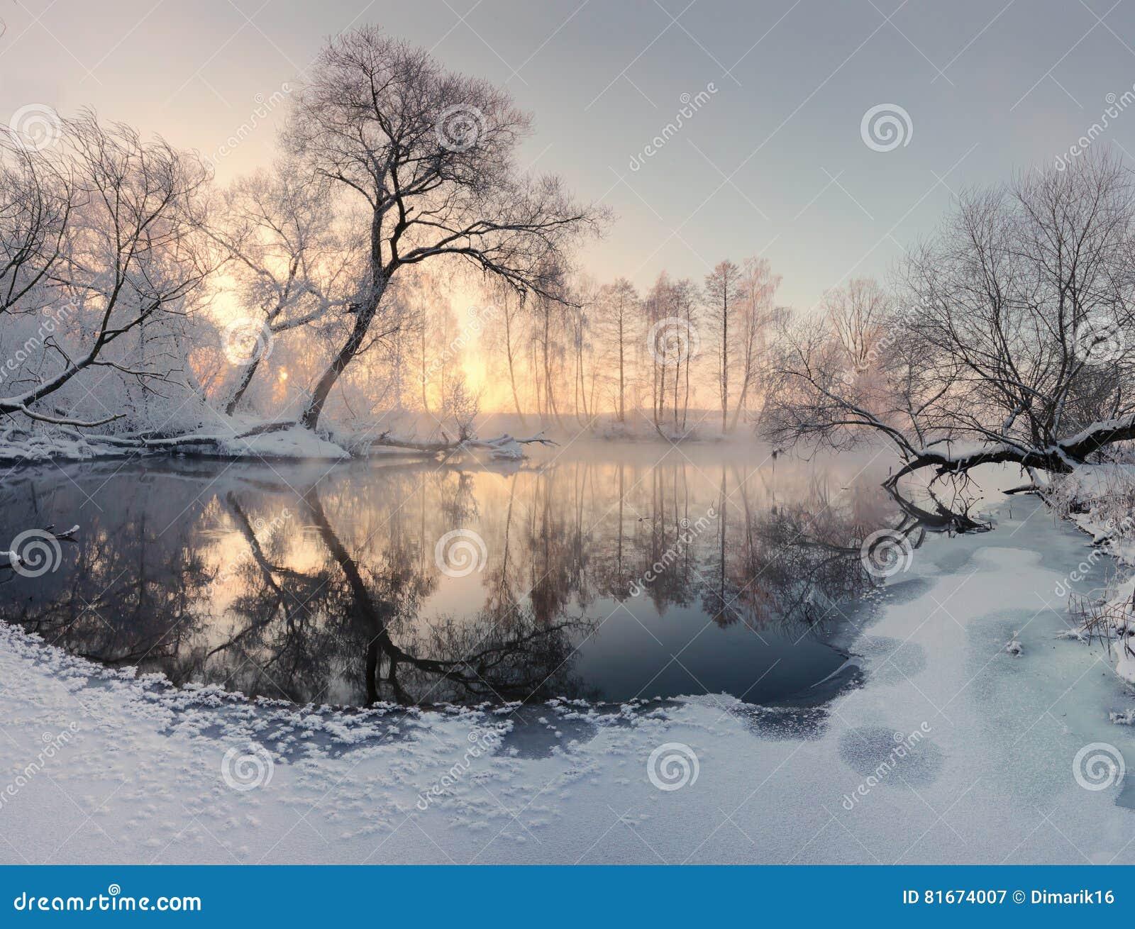Zimy słońce iluminuje mroźnych drzewa w ranku