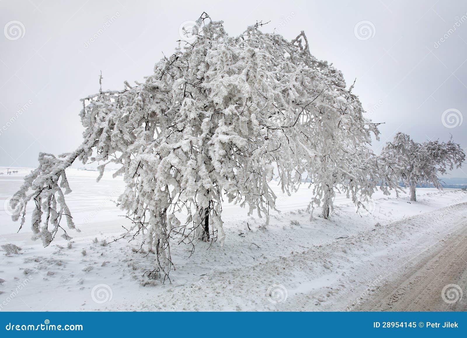 Zimy scena