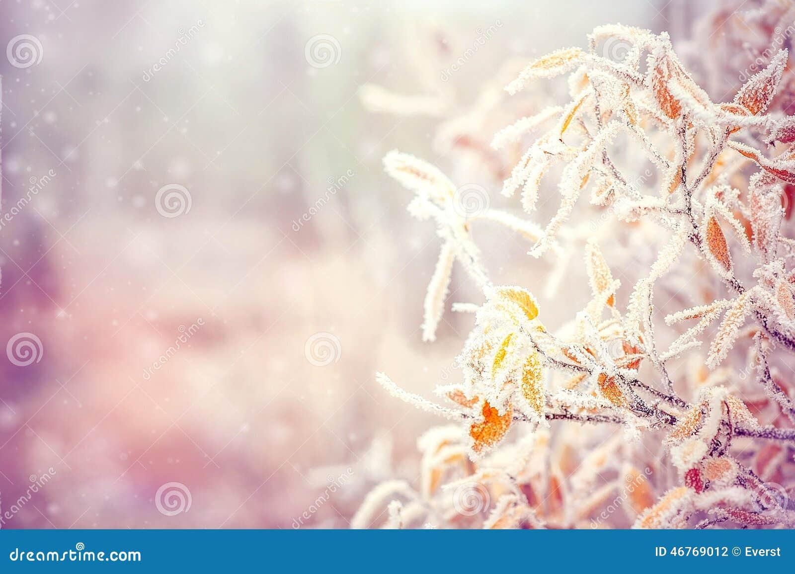 Zimy tło z śniegiem rozgałęzia się drzewnych liście