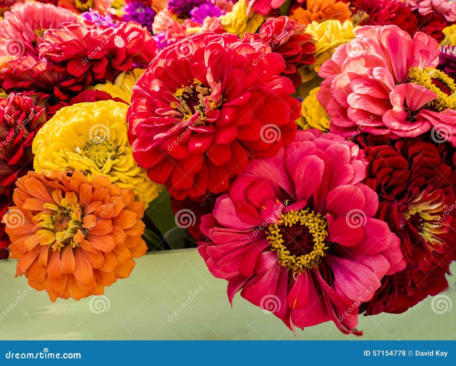 Zinnia flower bouquet stock photo. Image of sale, farm - 57154778
