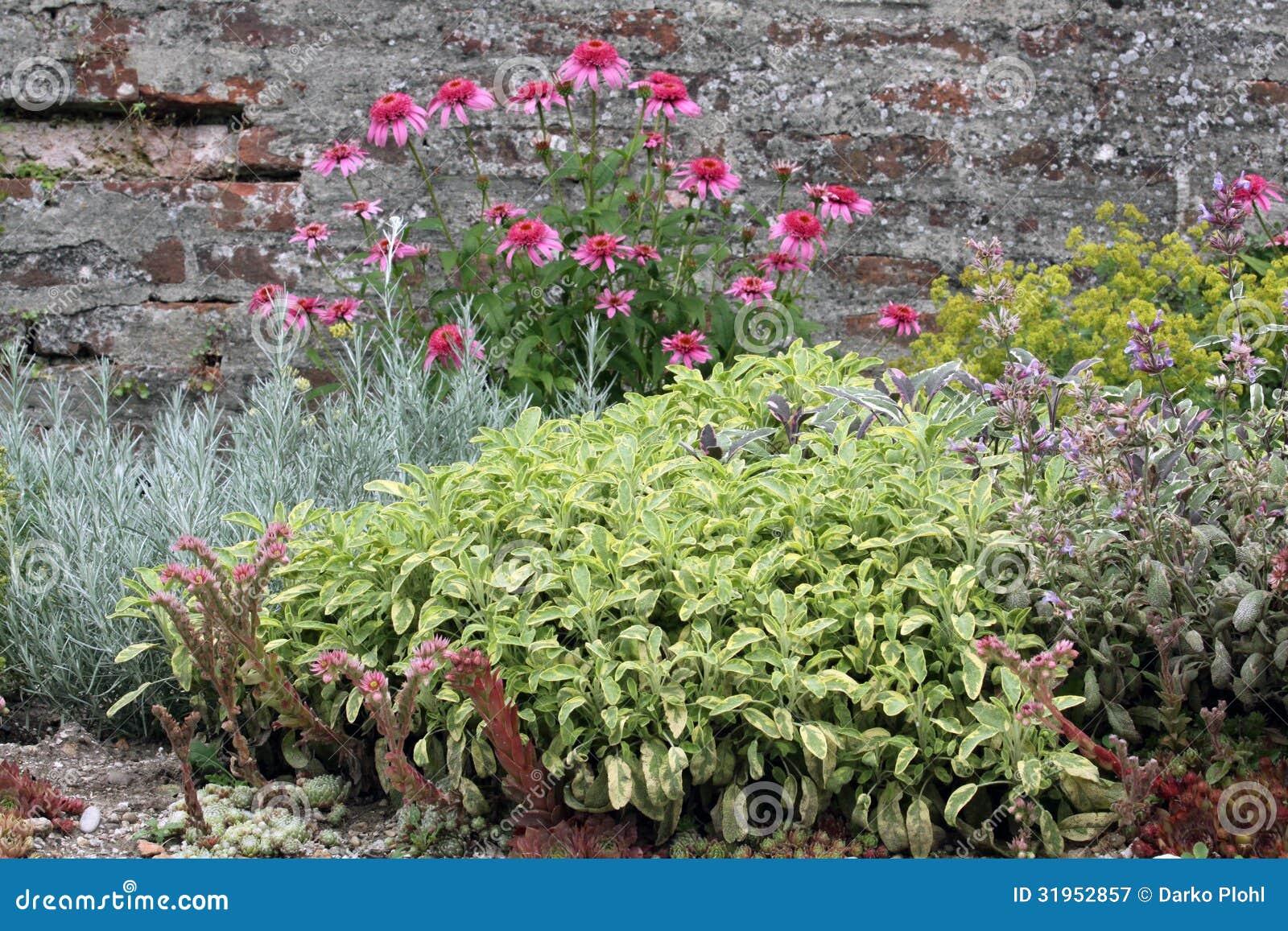 Ziołowy ogrodowy łóżko