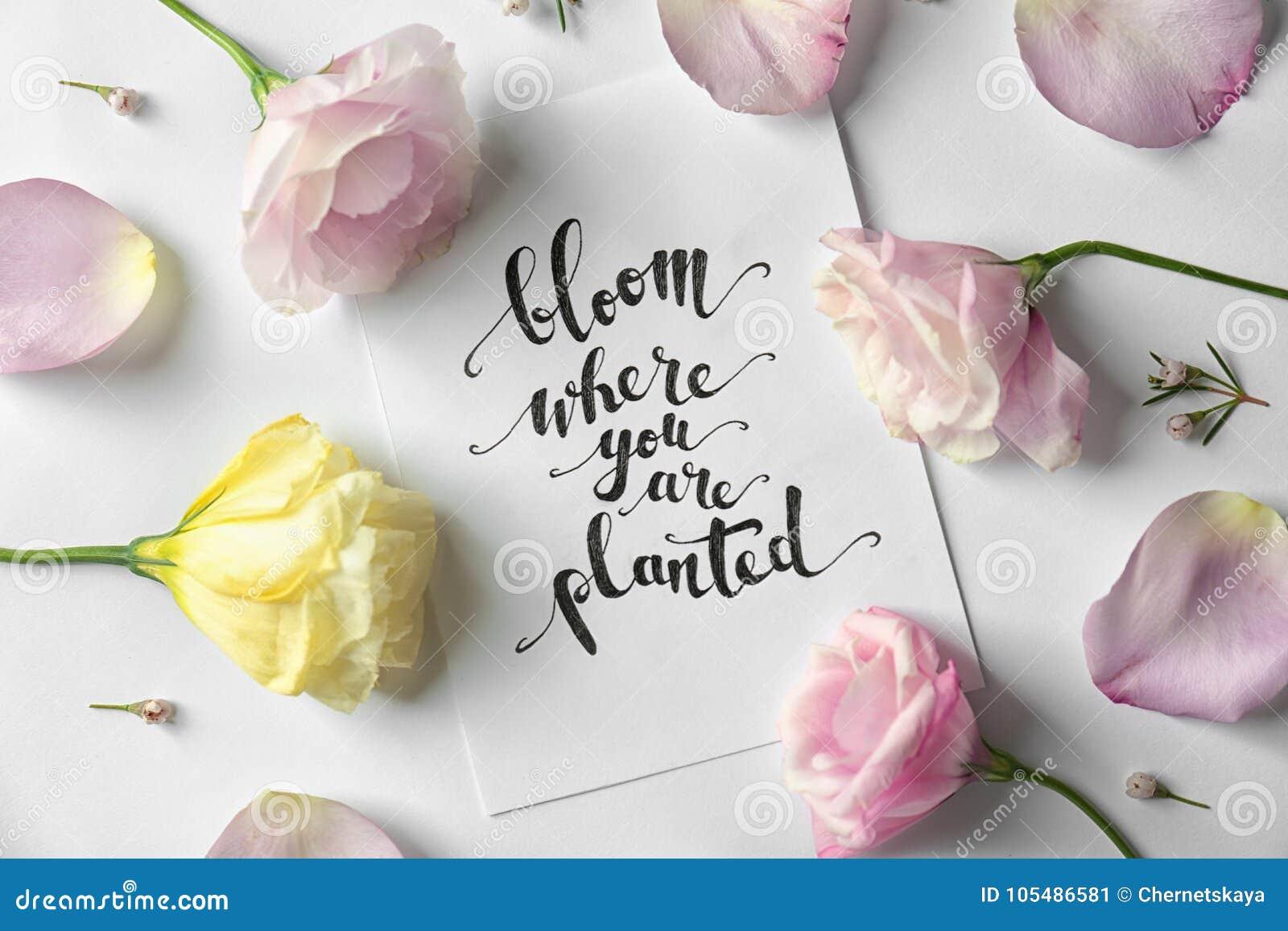 Zitieren Sie Blüte In Der Sie Das Gepflanzte Sind Das