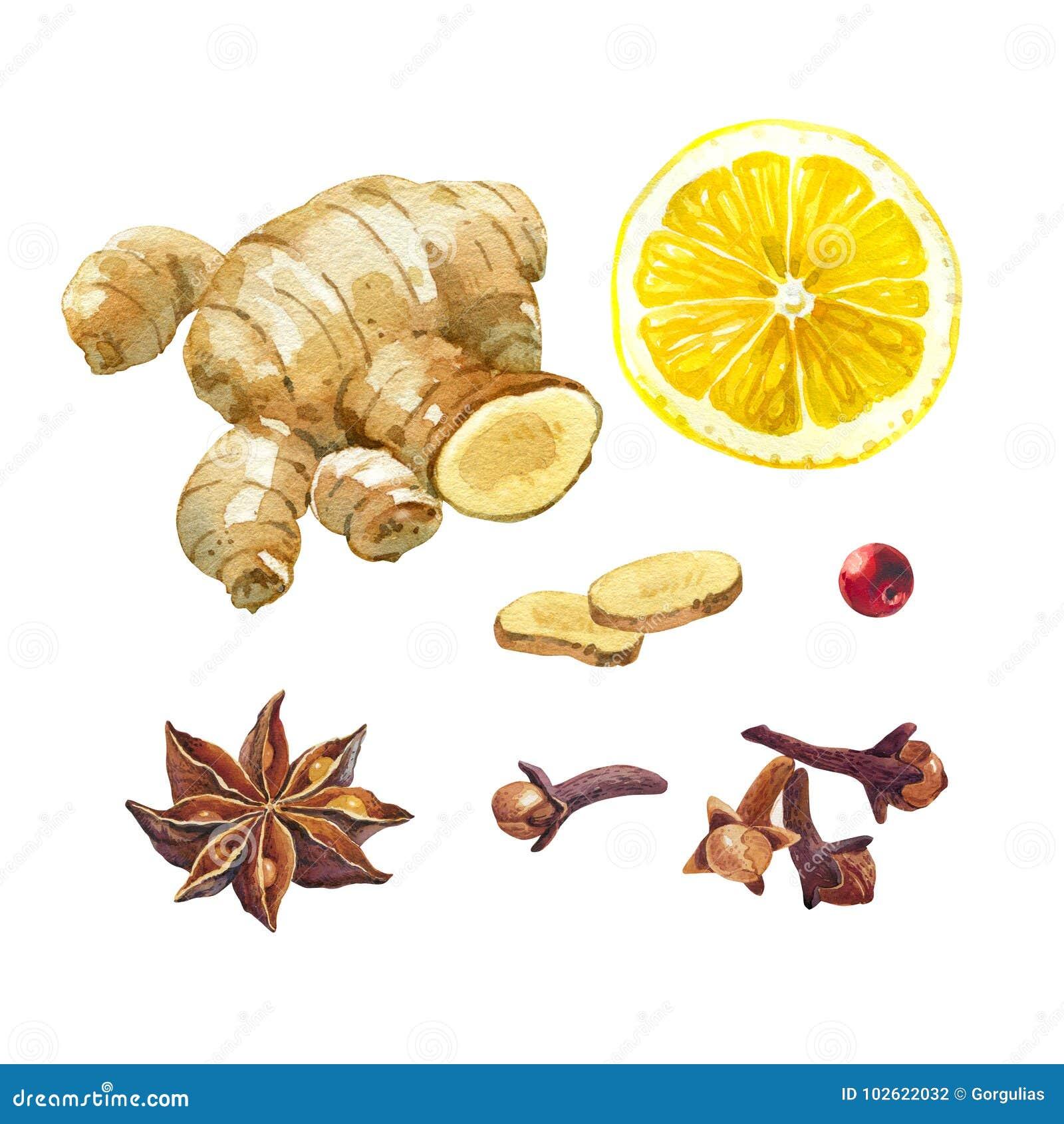 Zitronen-, giger- und Wintergewürze lokalisiert auf weißem Aquarellillustrationssatz
