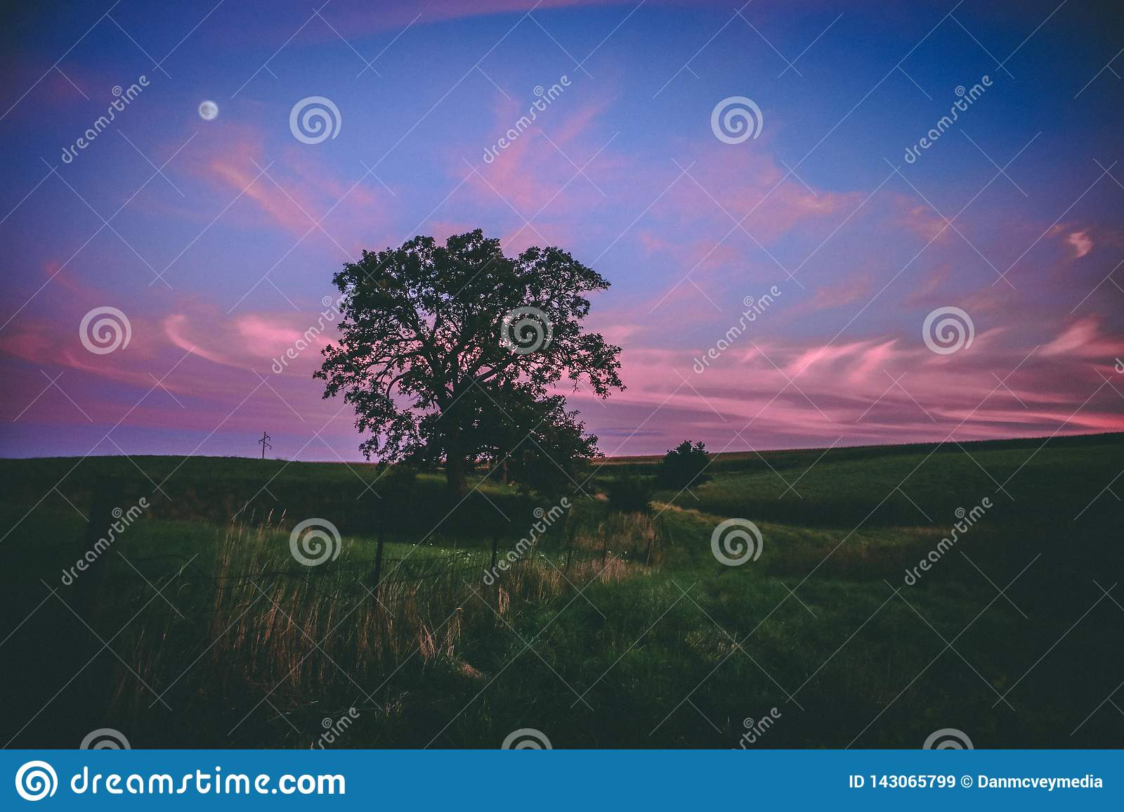 Zmierzch nad Epickim drzewem w Środkowy Zachód