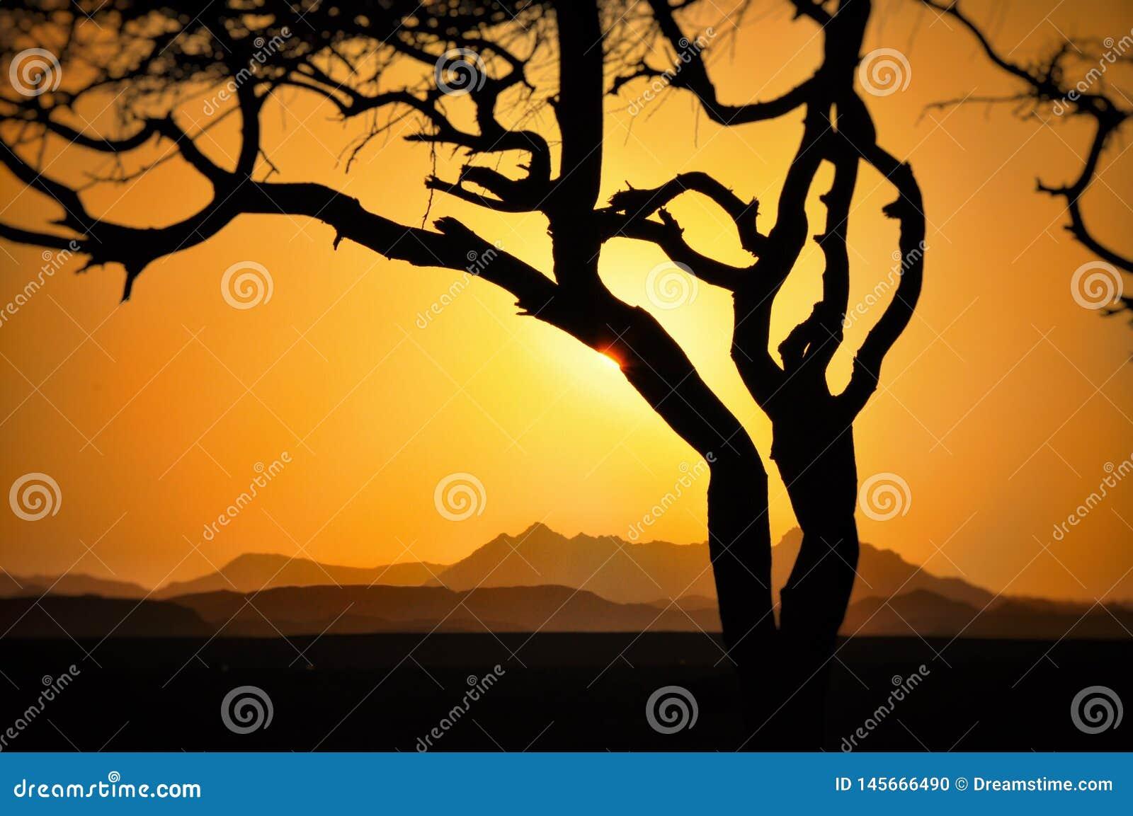 Zmierzch nad górami z drzewem z słońca jaśnieniem przez chmur gór chmurnieje