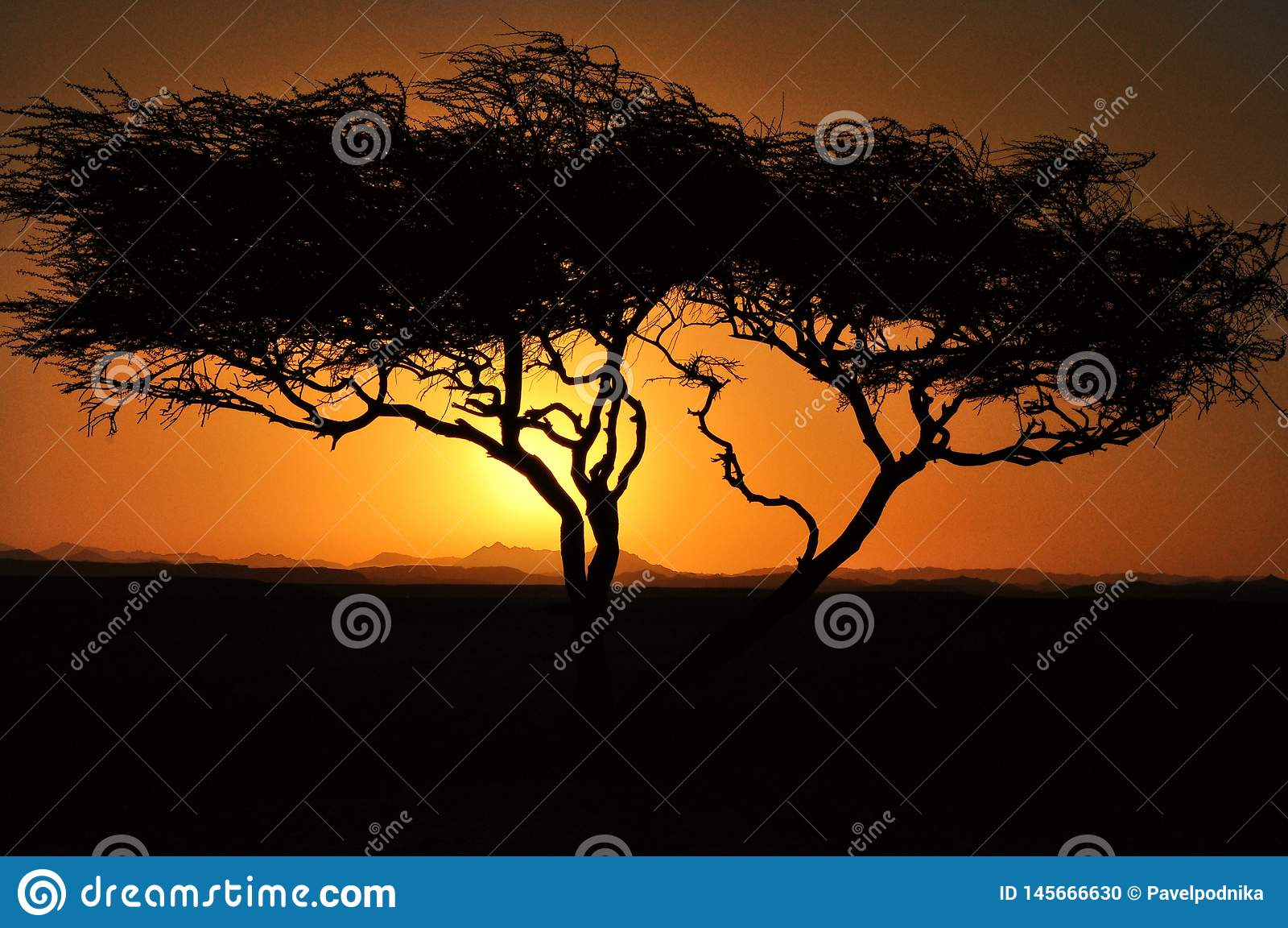 Zmierzch nad g?rami z drzewem z s?o?ca ja?nieniem przez chmur g?r chmurnieje