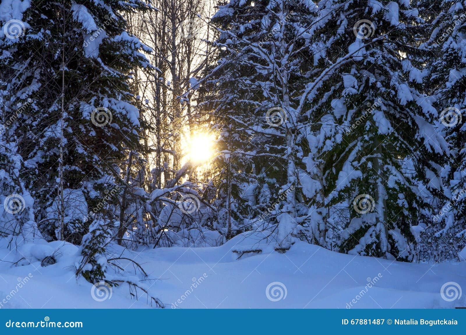 Zmierzch w drewnie w zimie w Rosja Syberia