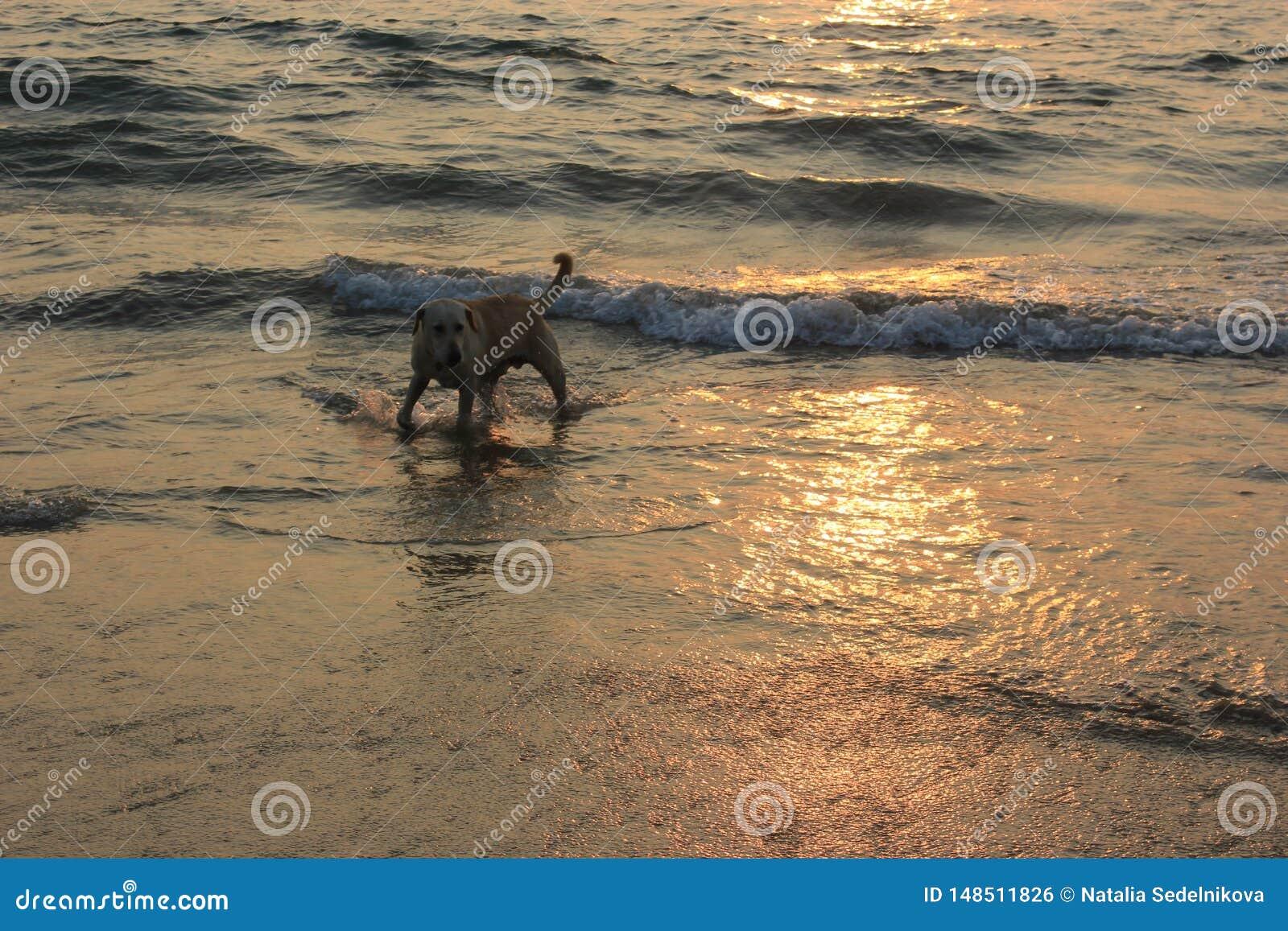 Zmierzch w Goa, ocean indyjski