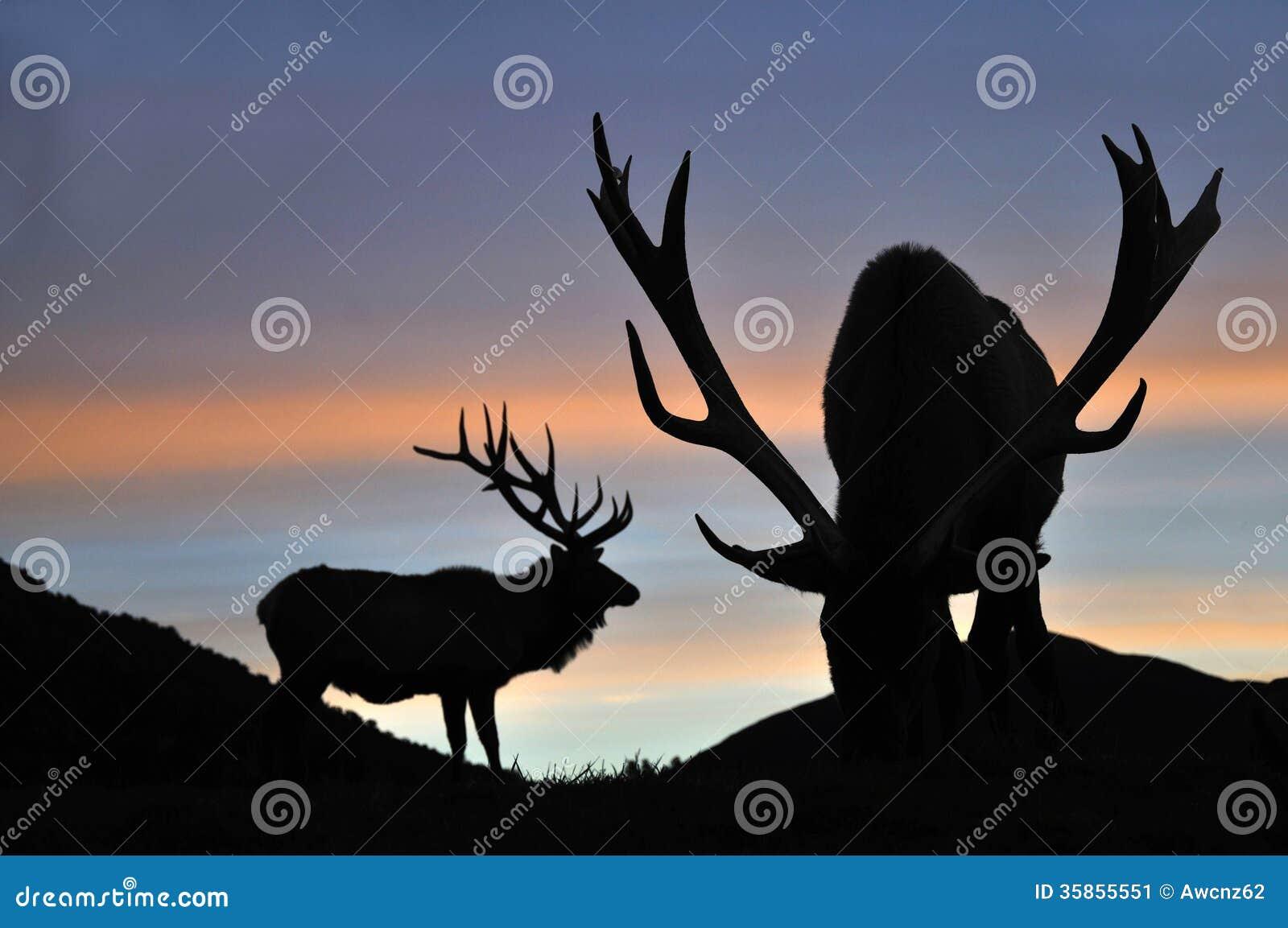 Zmierzchu jeleń