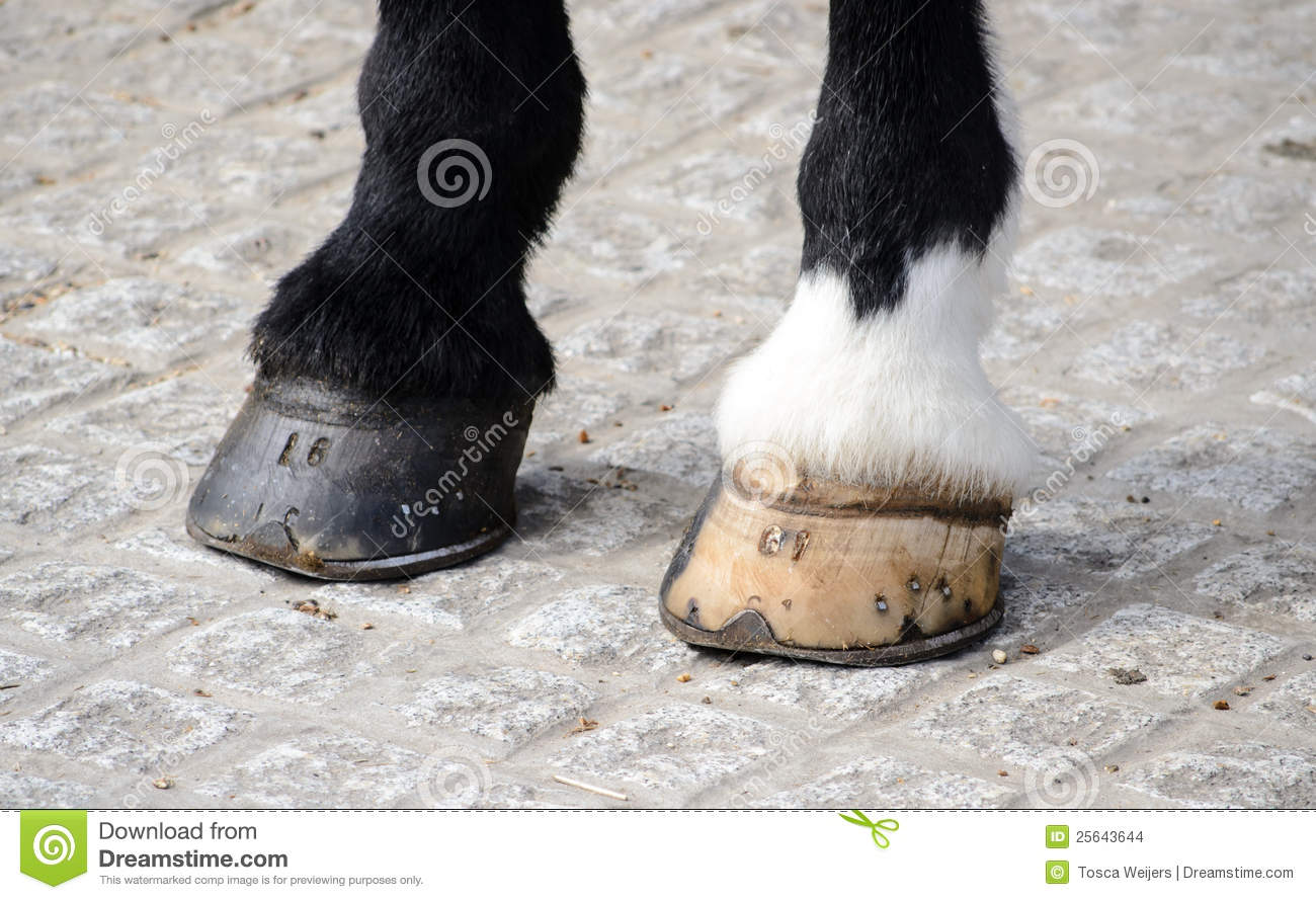 Black Hoof Paint